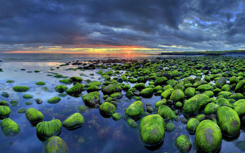 Free Wallpaper Fall Flowers Iceland Wallpaper Hd Mossy Rocks Sunset Beach Nature