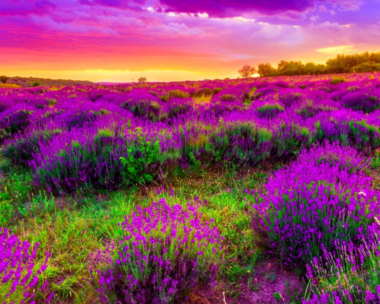 Fall Wallpapers For Tablet Spring Field With Purple Flowers Sky Clouds Beautiful