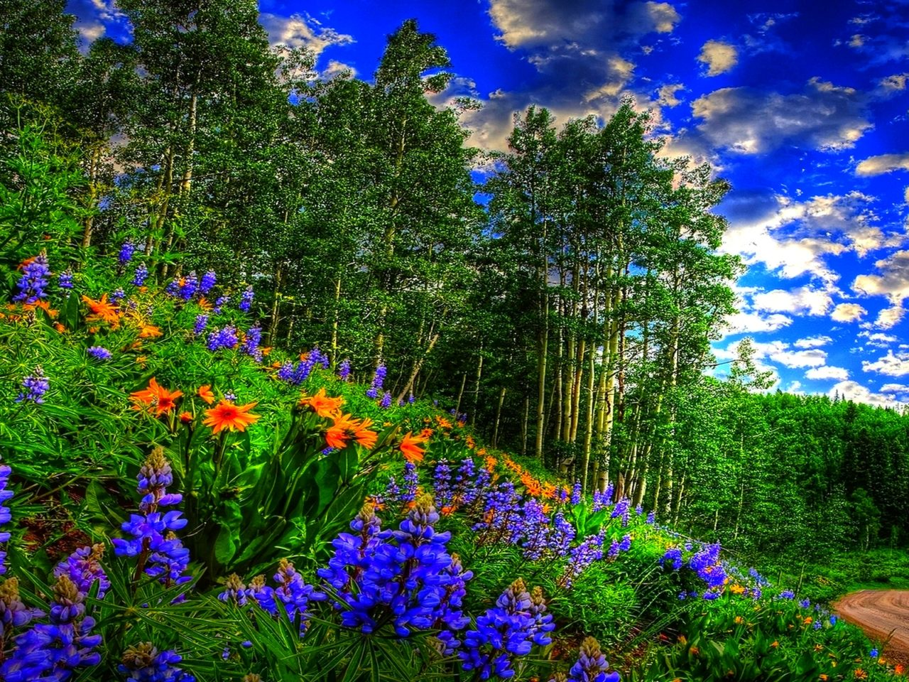 Fall Pc Wallpaper Free Spring Forest Sky Clouds Flowers Forest Road Wallpaper