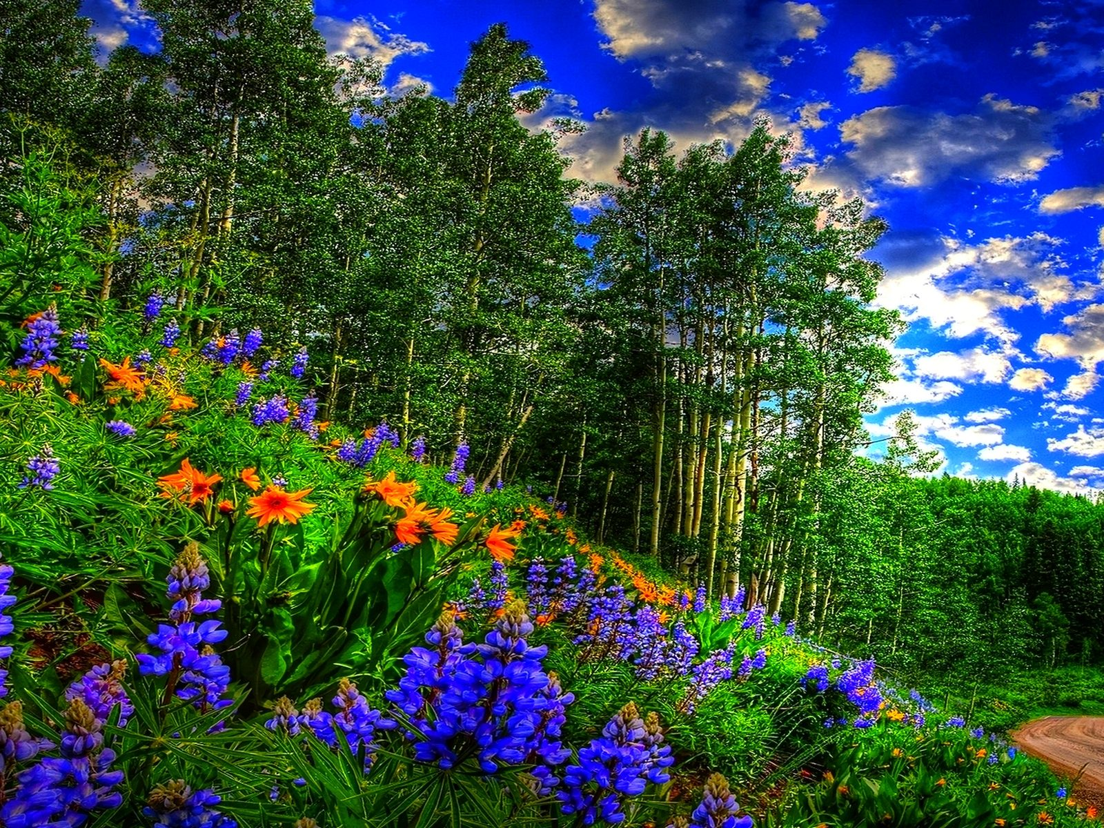 Fall Tablet Wallpaper Spring Forest Sky Clouds Flowers Forest Road Wallpaper