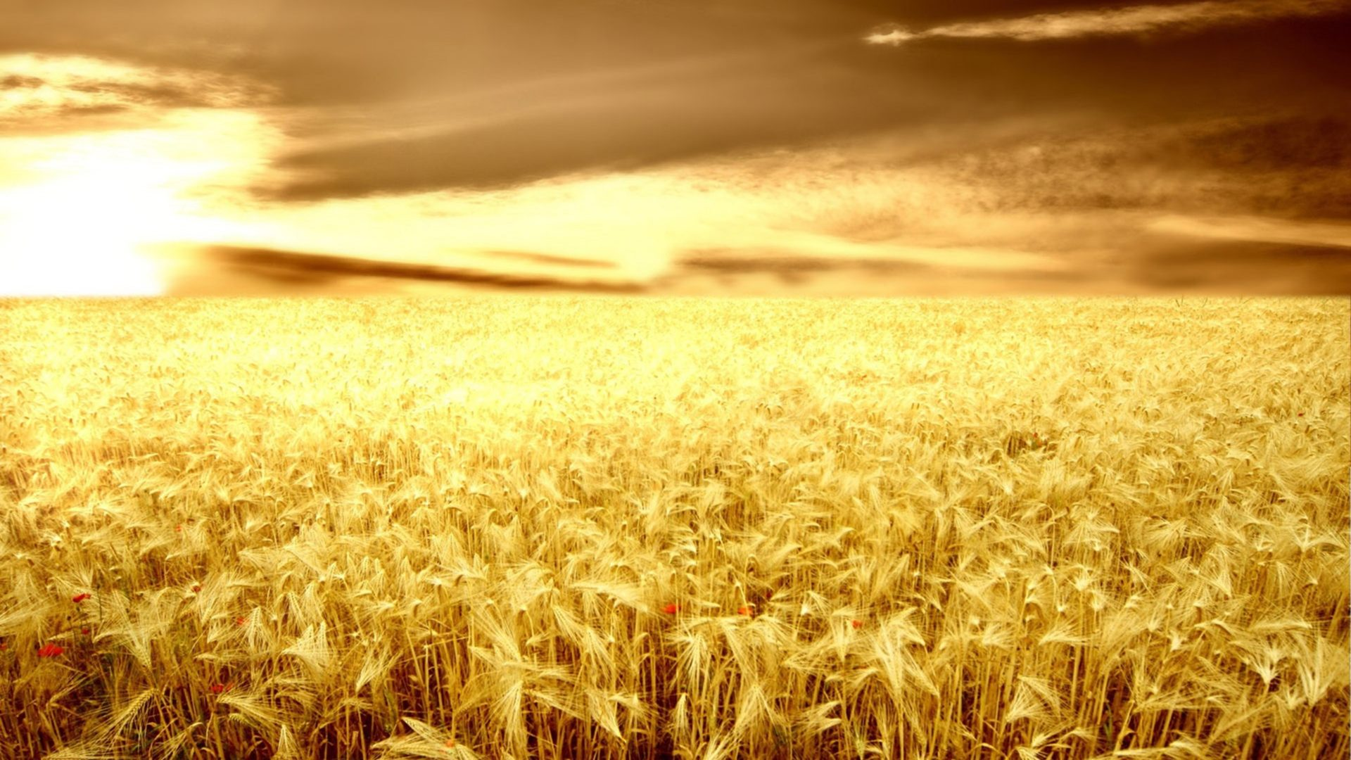 Wallpaper For Iphone 4 Lock Screen Sunset Over The Wheat Field Wallpaper Nature Wallpaper