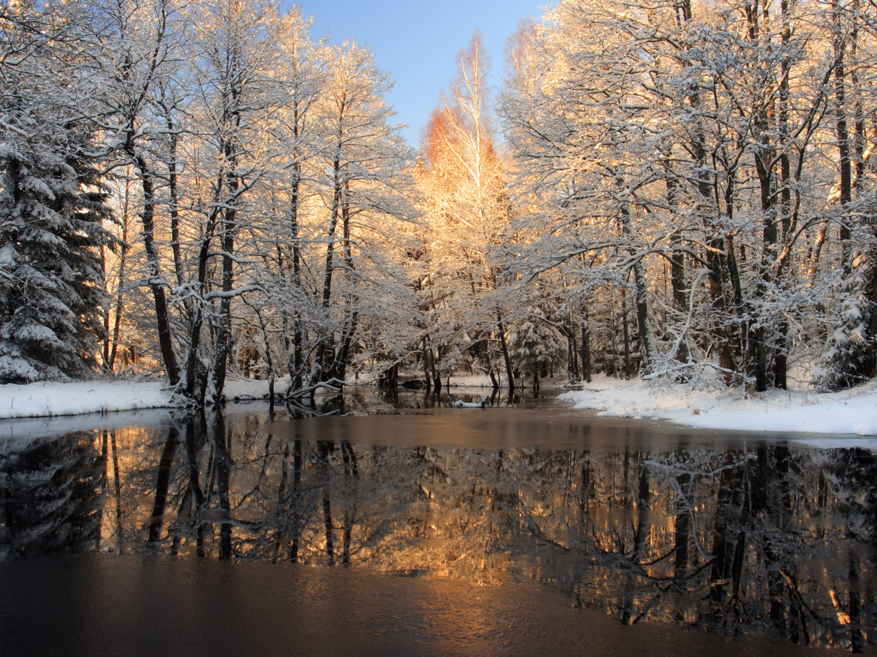 Donald Duck Iphone Wallpaper Winter Trees Covered With Snow Frozen Lake Background