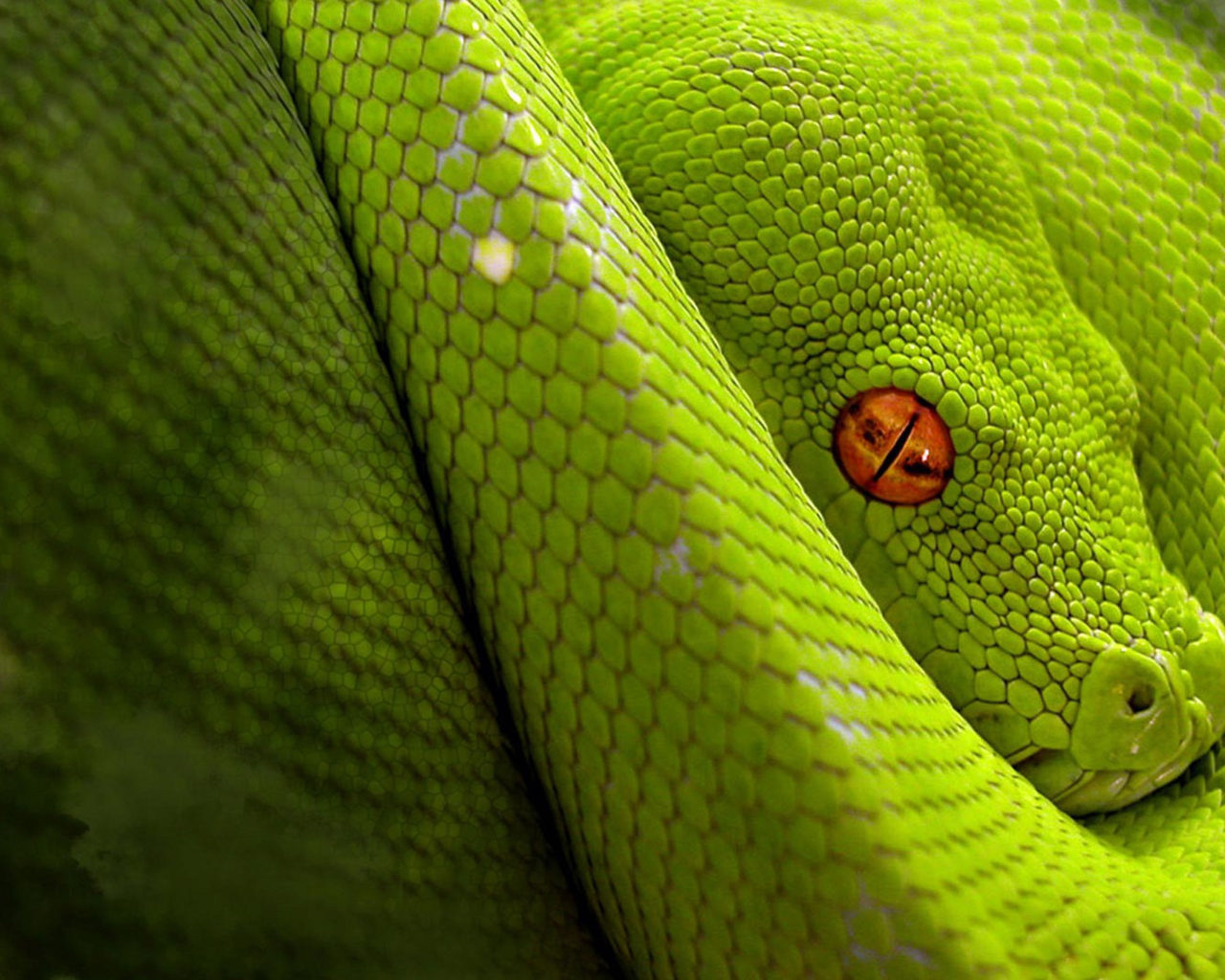 Free Download Cute Baby Wallpaper For Pc Animal Green Snake Close Up Hd Wallpaper Wallpapers13 Com
