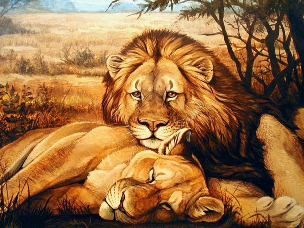 Cute Couple Wallpapers For Lock Screen Animals Lion Lioness Relaxing Hd Wallpaper Wallpapers13 Com