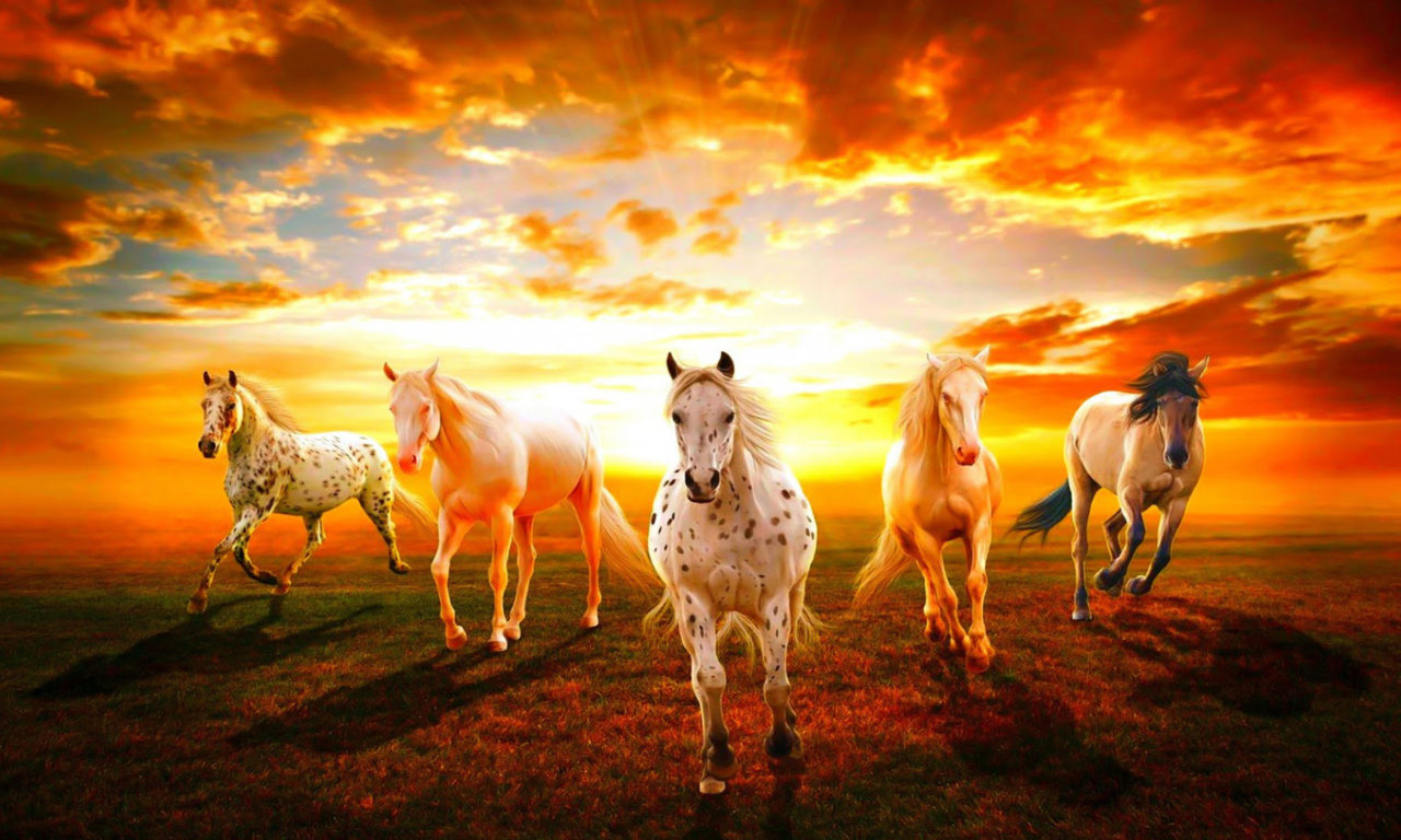 Beautiful Wild Animals Wallpapers Beautiful Wallpaper Hd Horses Sunset Hd Wallpaper