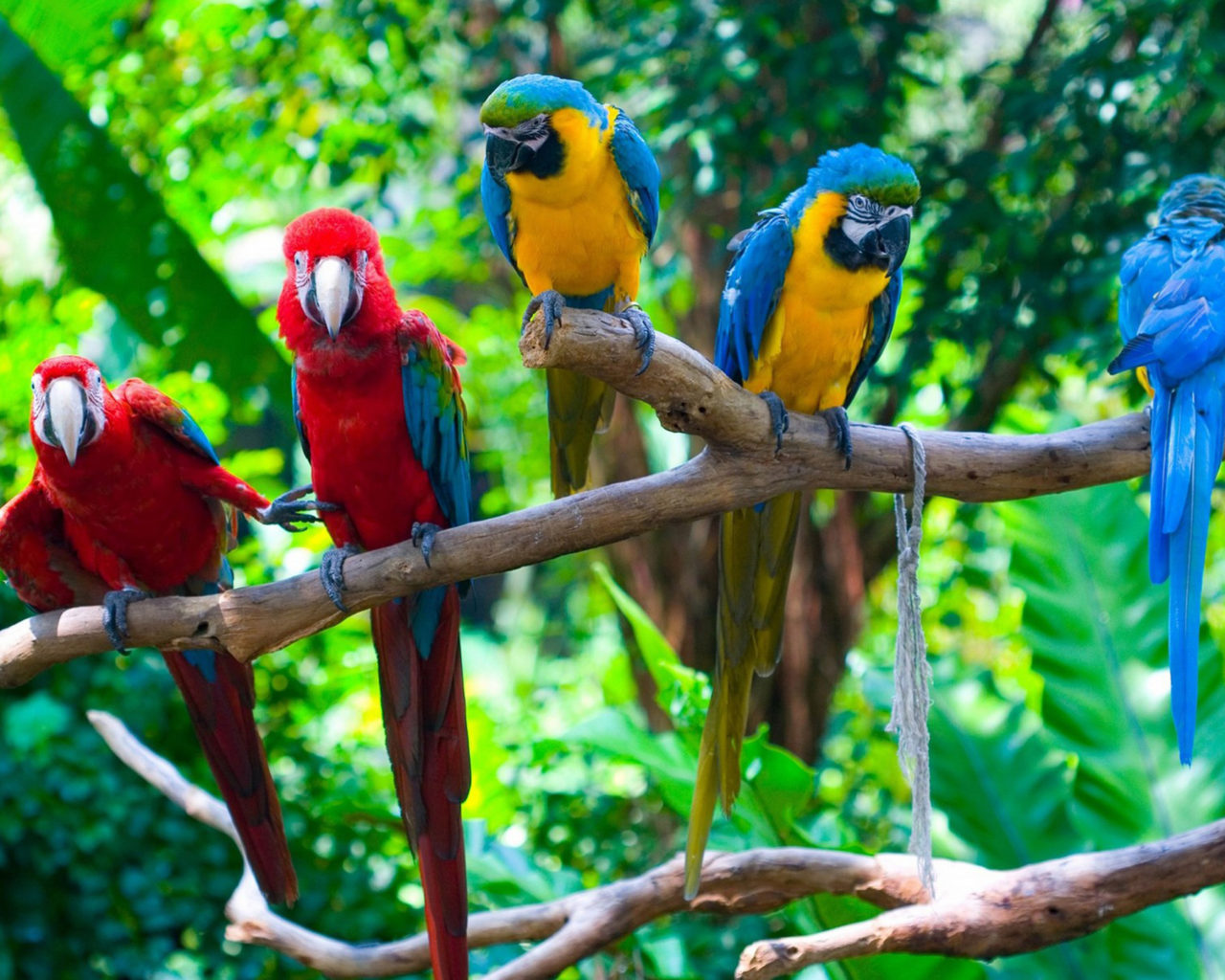 1920x1200 Fall Wallpaper Colorful Parrots On Branch Background Position Of Egotism