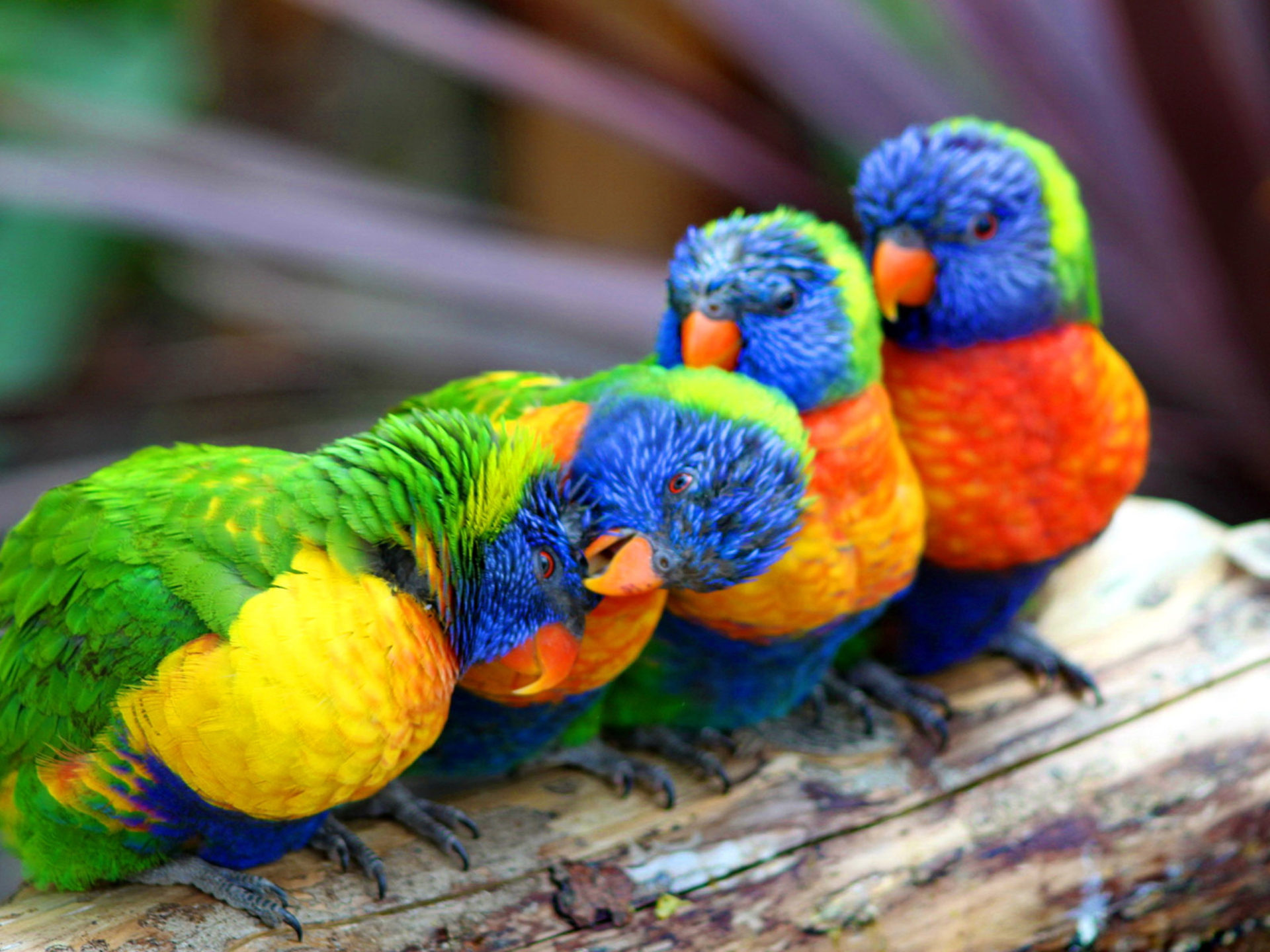 Cute Lock And Key Wallpaper Cute Colorful Parrot Wallpapers Hd Wallpapers13 Com