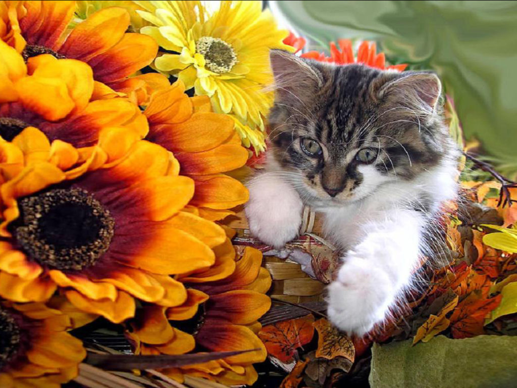 Cute Tiger Cubs Hd Wallpapers Cute Kitten In A Basket Orange And Yellow Flowers Hd