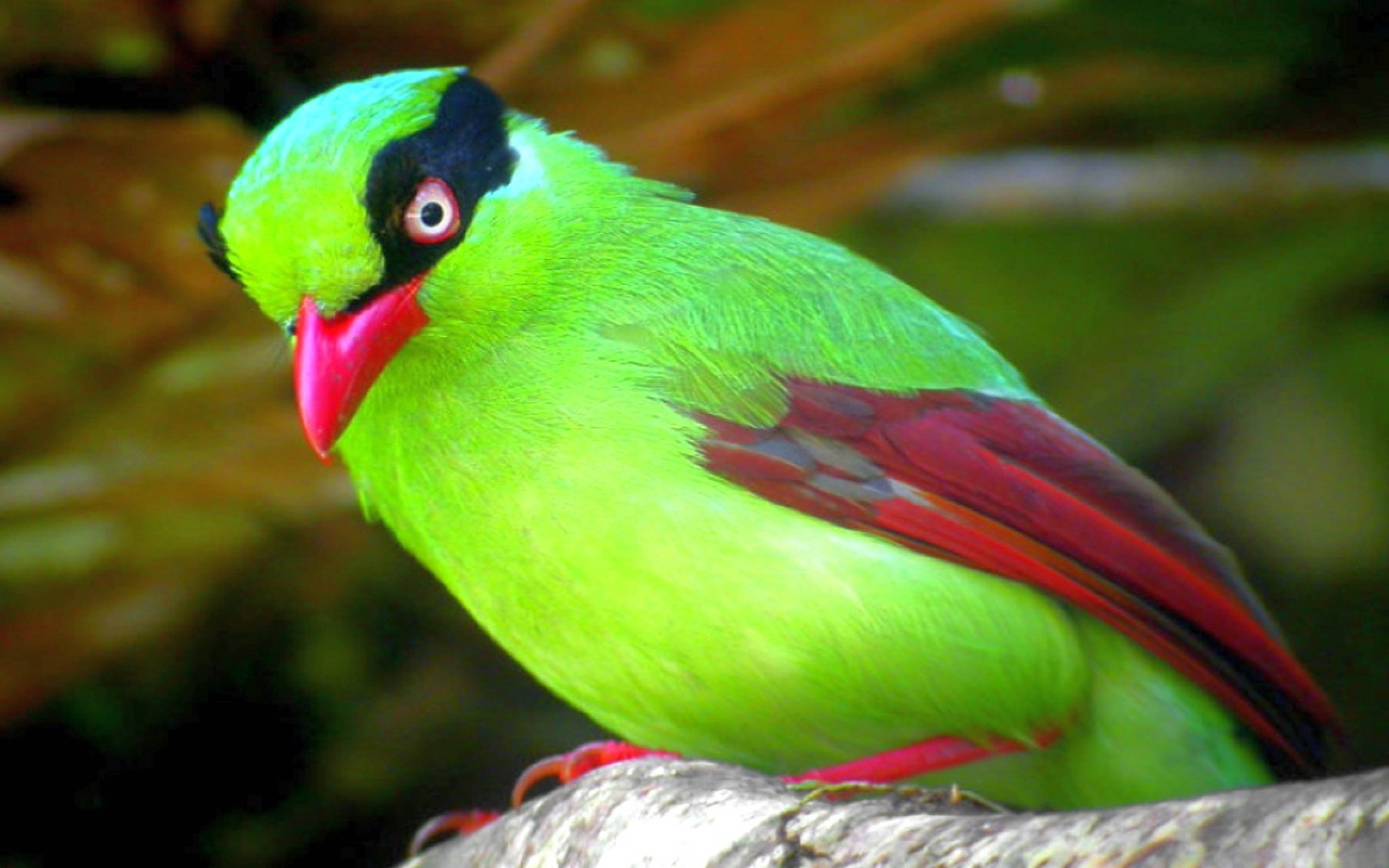 Free Fall Wallpapers For Ipad Cute Little Green Bird Computer Hd Wallpapers