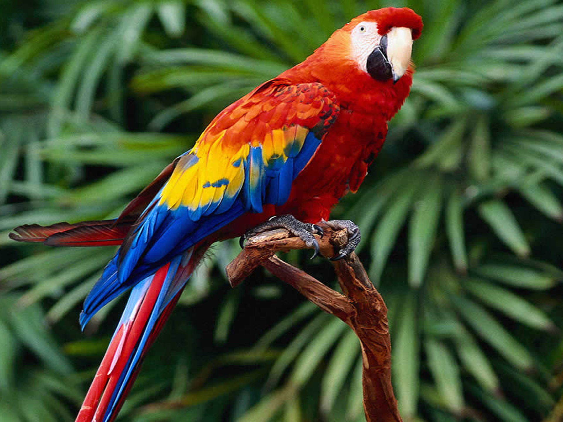 Gif As Wallpaper Iphone X Download Wallpapers Scarlet Macaws Widescreen 3840x2400