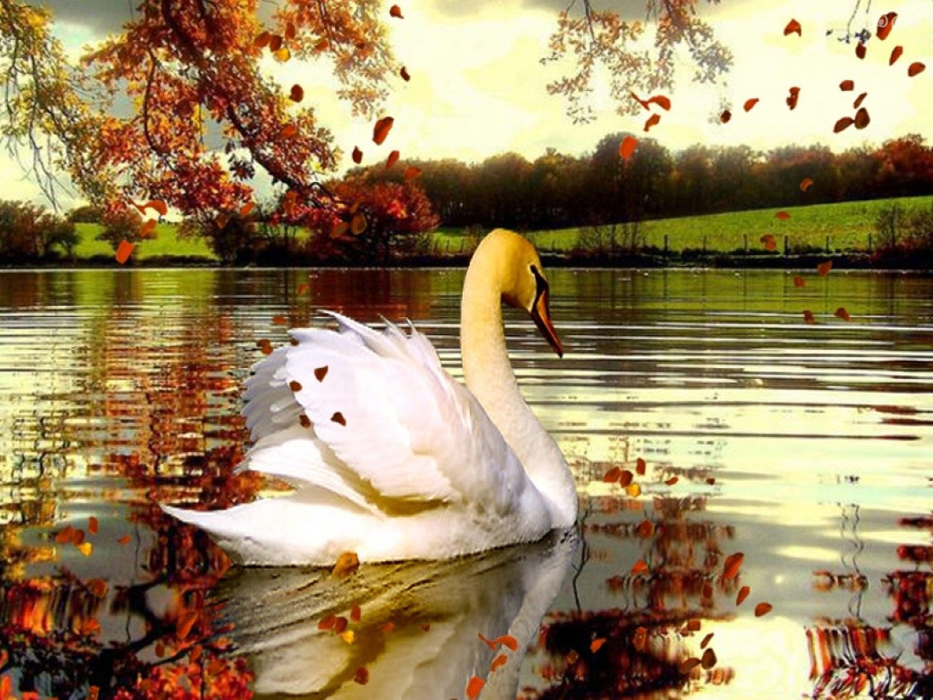 Free Fall Wallpaper With Animals Fall Lake With Swans Beautiful Background Wallpapers13 Com