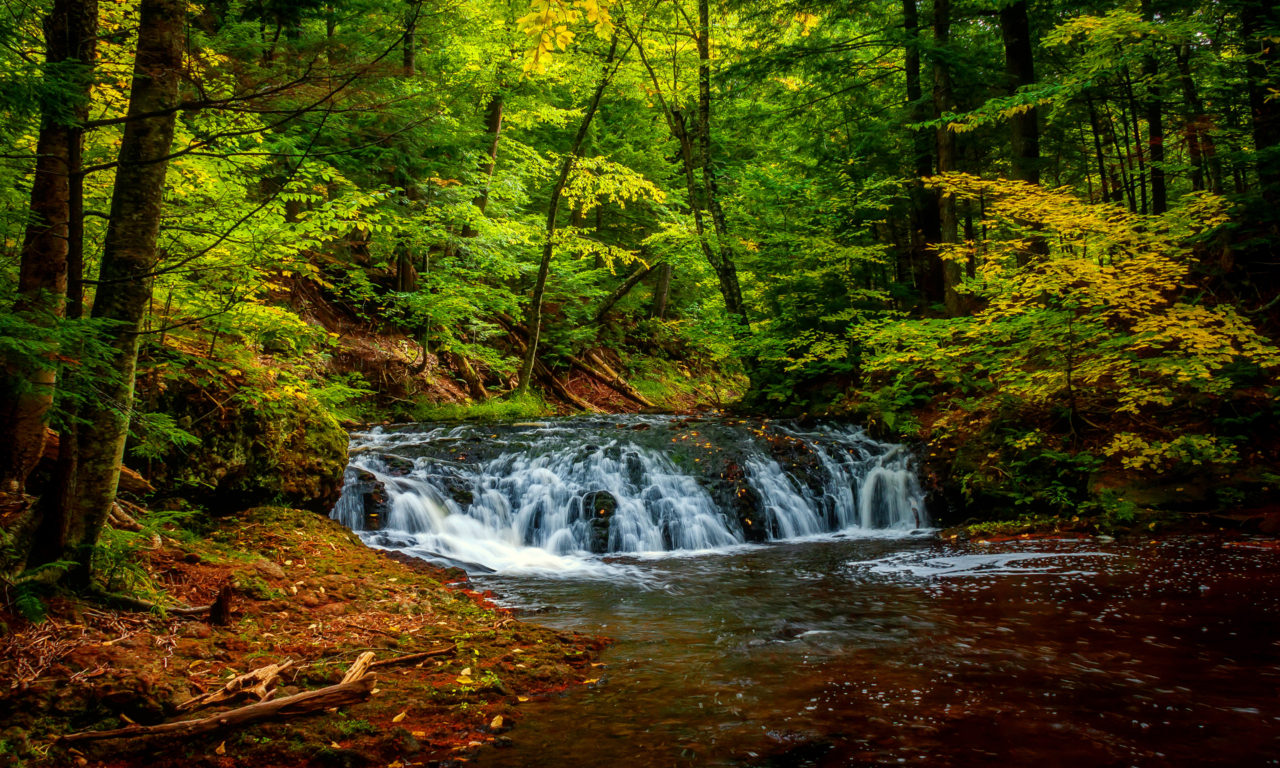 Free Country Fall Wallpaper Forest Landscape River Forest Green Hd Wallpaper 34809