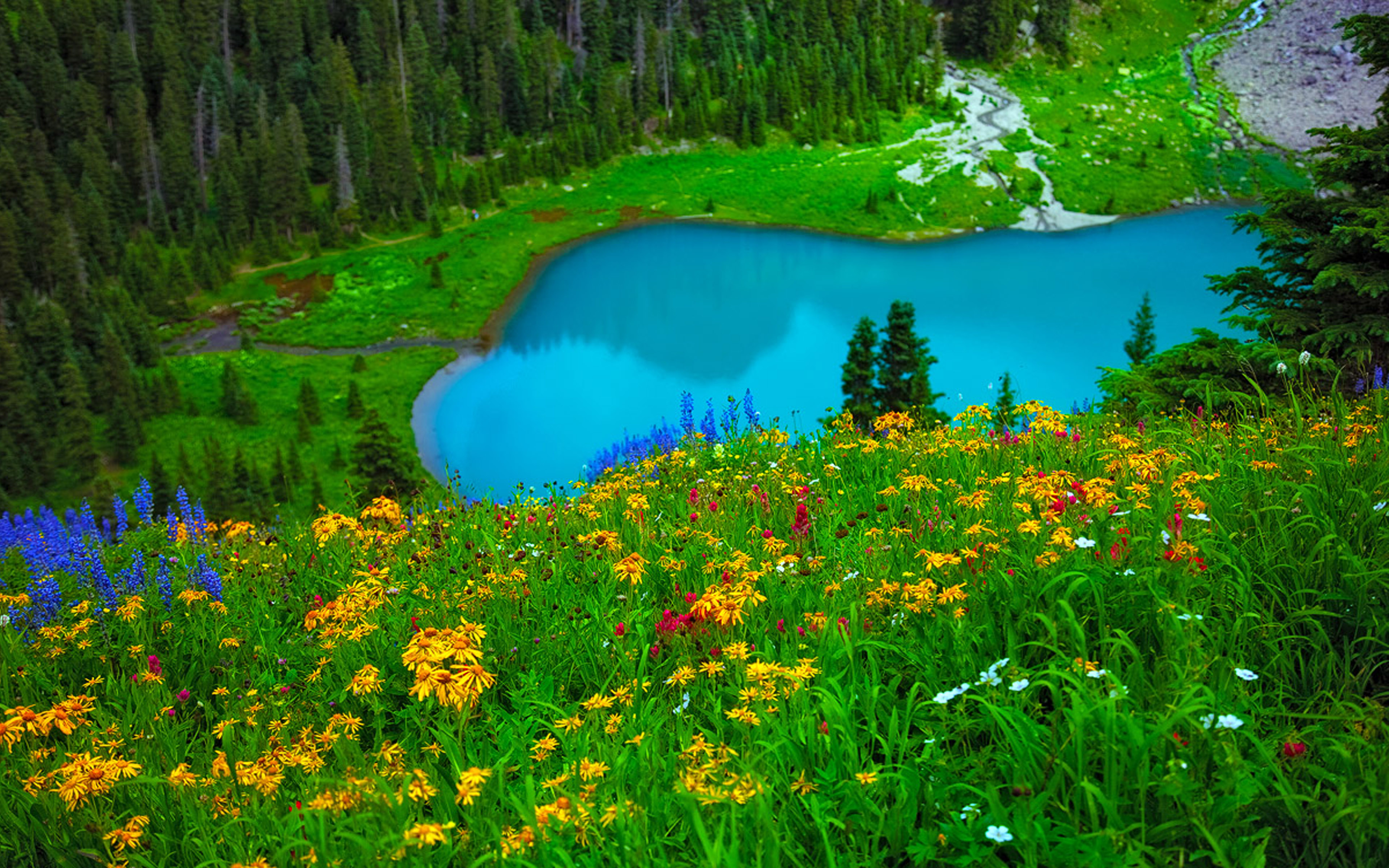 Gorgeous Turquoise Blue Lake Green Grass And Yellow Flowers Forest Wallpapers Hd