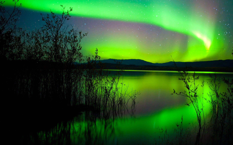 Dinosaur Wallpaper Cute Green Northern Lights Canada Hd Wallpaper 1800x2880