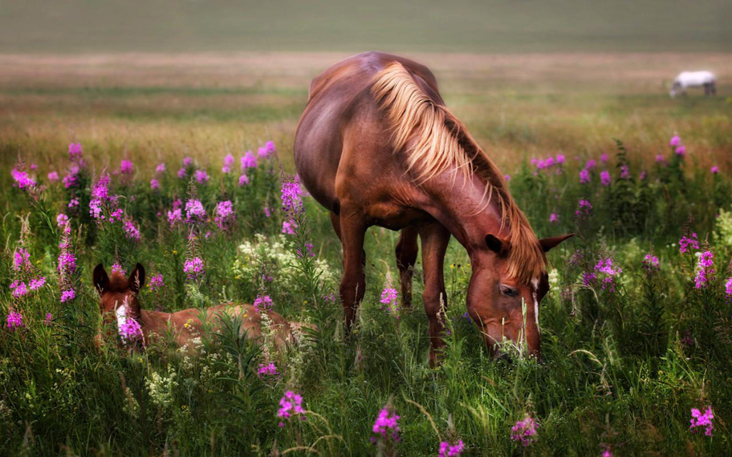 Cute Lock Screen Wallpapers Hd Horses Red Mare And Foal Meadow Flowers Hd Wallpaper4829