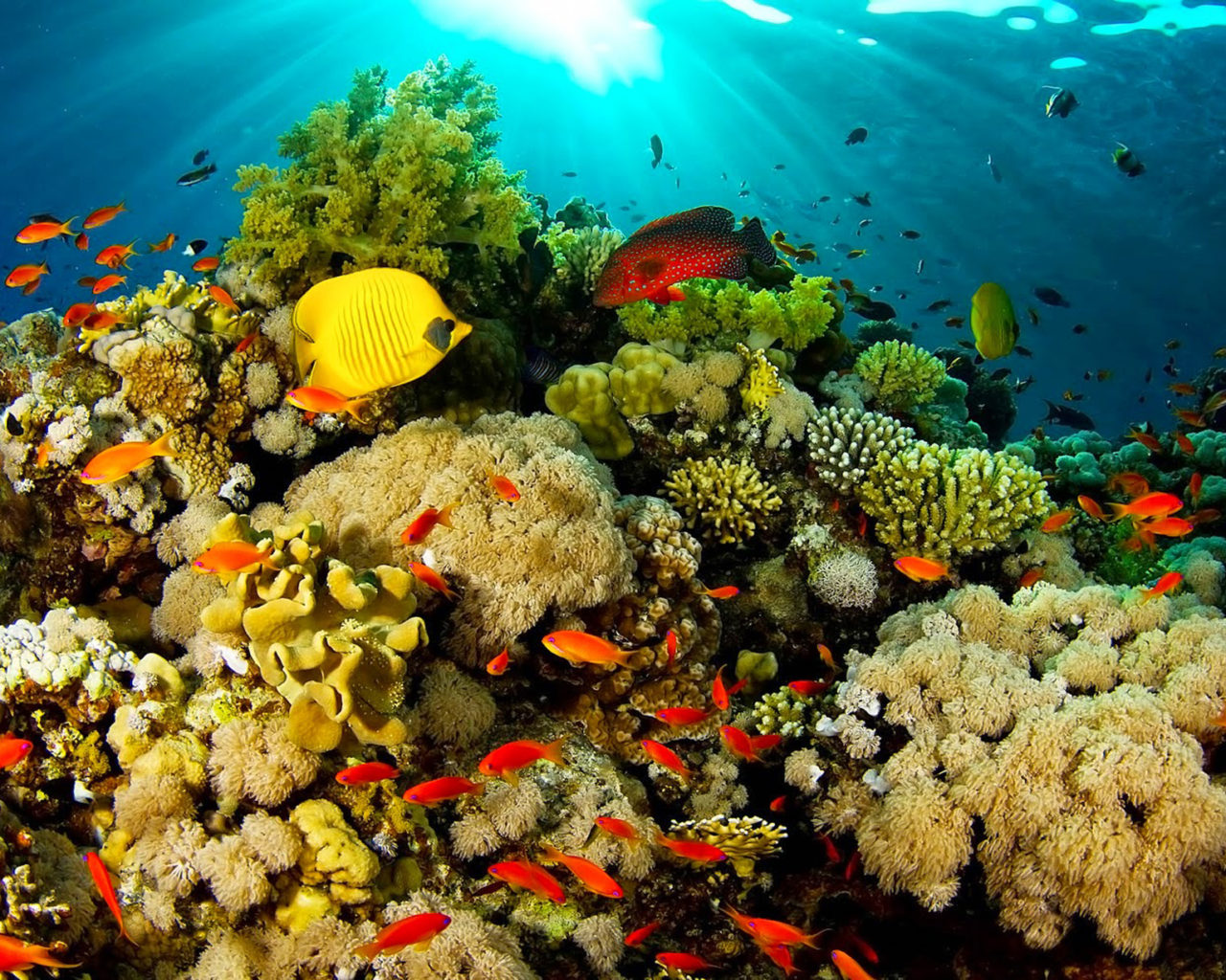 Wallpaper Fish Iphone Ocean Fauna Under Water Coral Reefs With Beautiful Coral