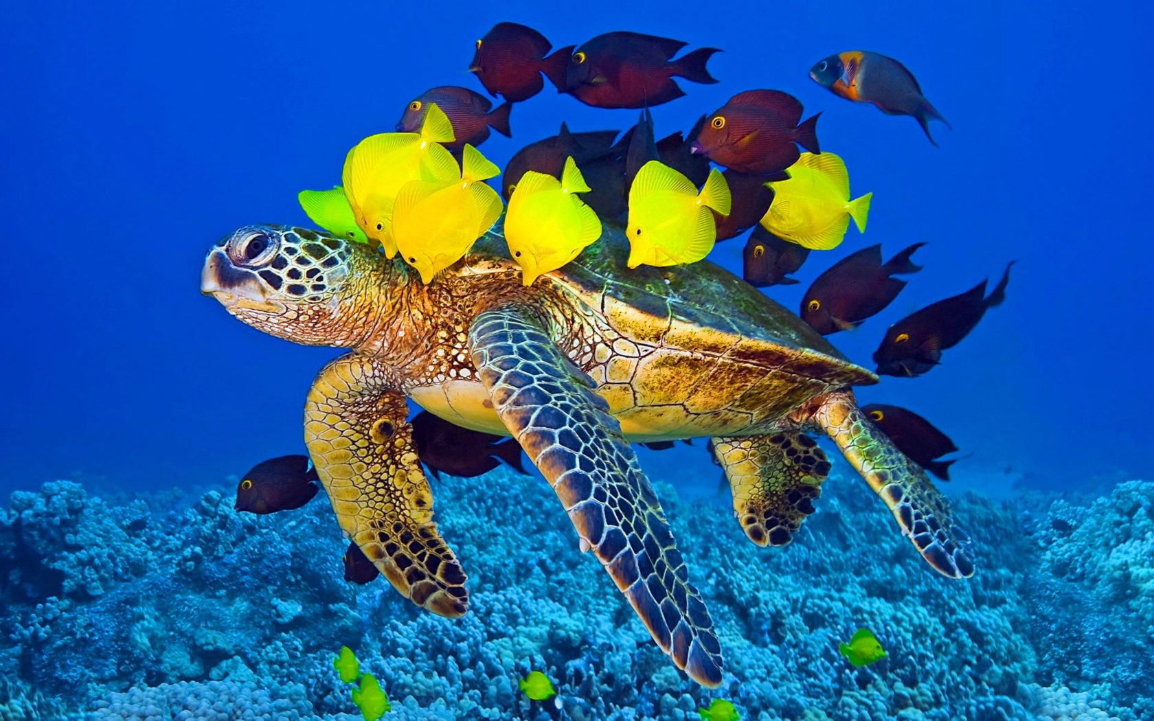 Wallpaper Fish Iphone Sea Turtle And Fish Wallpaper Hd For Laptop Mobile Phone