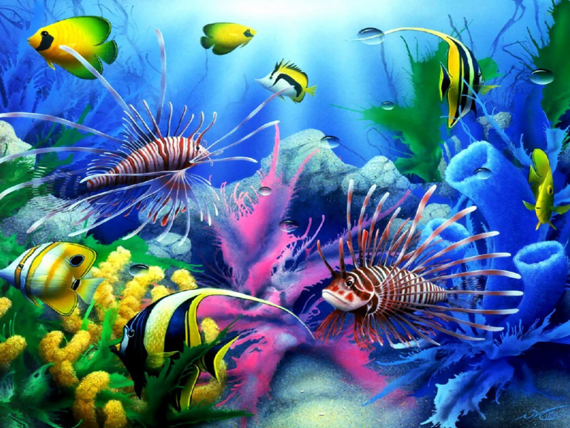 Animated Princess Wallpapers Sea Seabed Colorful Tropical Fish Coral Wallpaper Hd For
