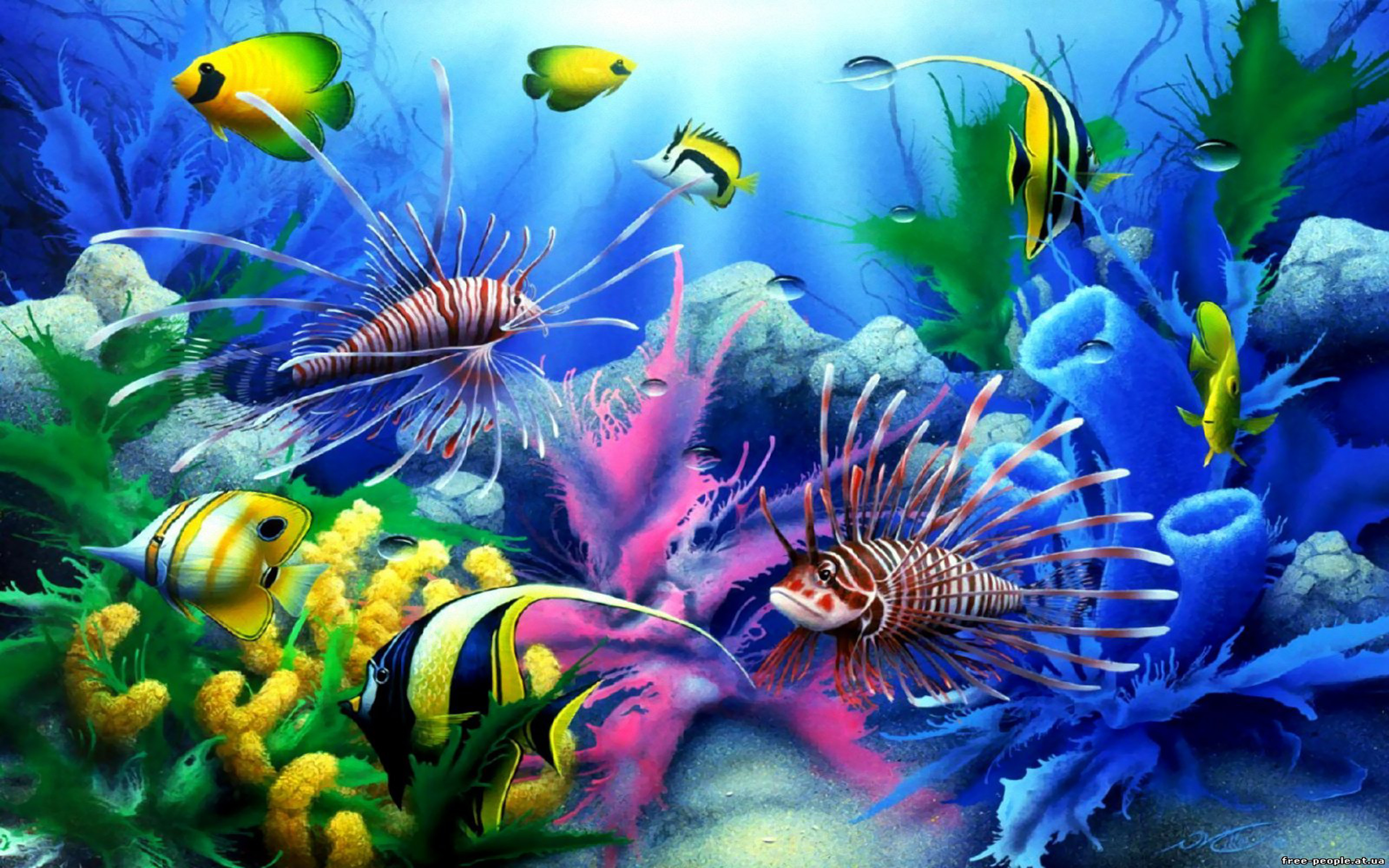 Cute Wallpapers For Phone Free Download Sea Seabed Colorful Tropical Fish Coral Wallpaper Hd For