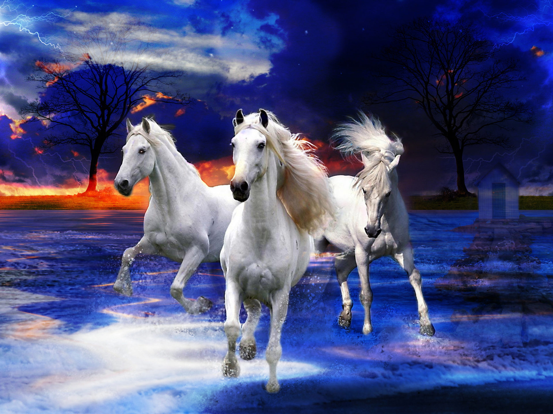 Cute Animals Hd Wallpapers Free Download Three White Wild Horses Photo Fantasy Art Wallpapers13 Com