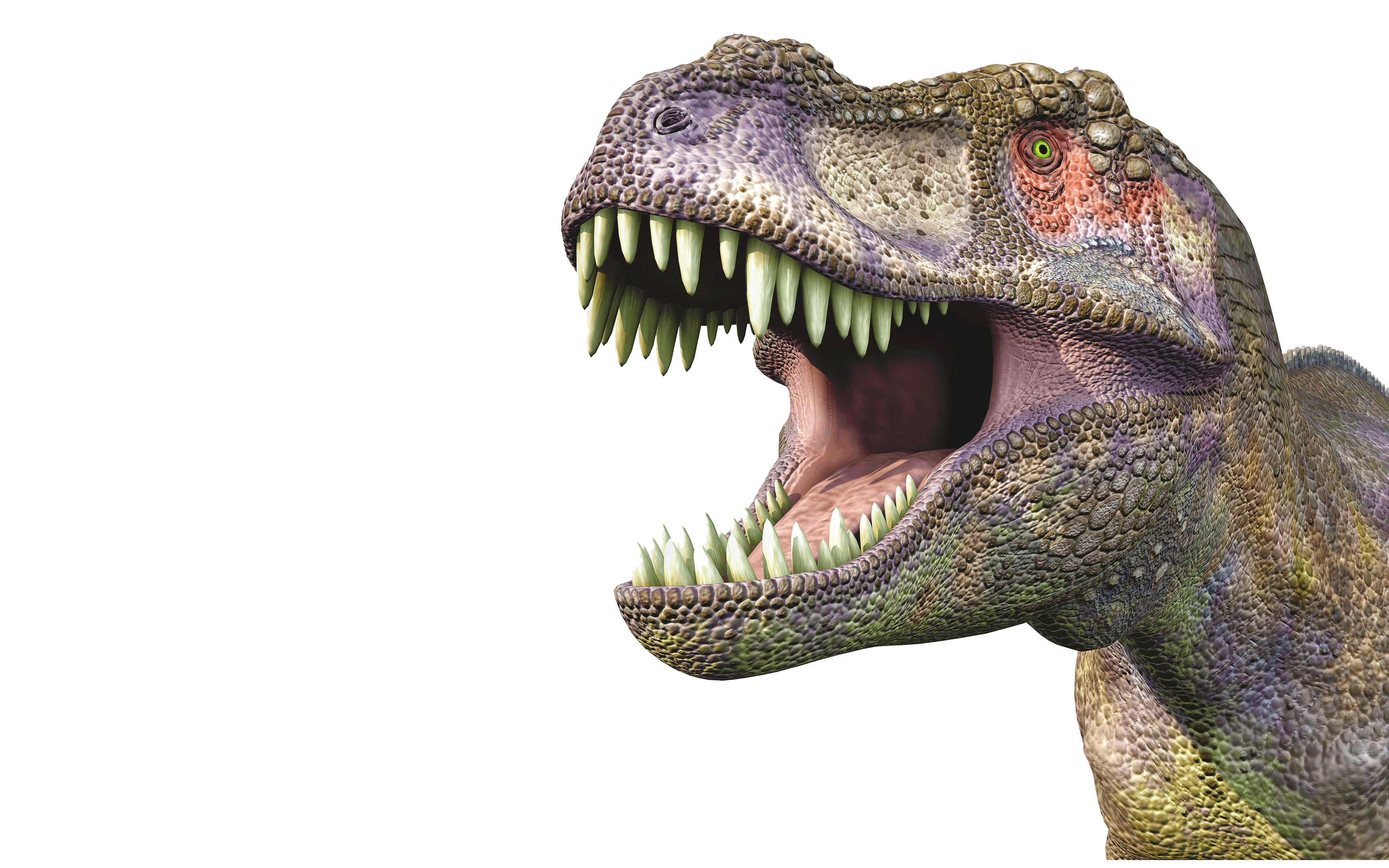 Cars Wallpapers For Pc Free Download Tyrannosaurus Huge Head 62567 Wallpapers13 Com