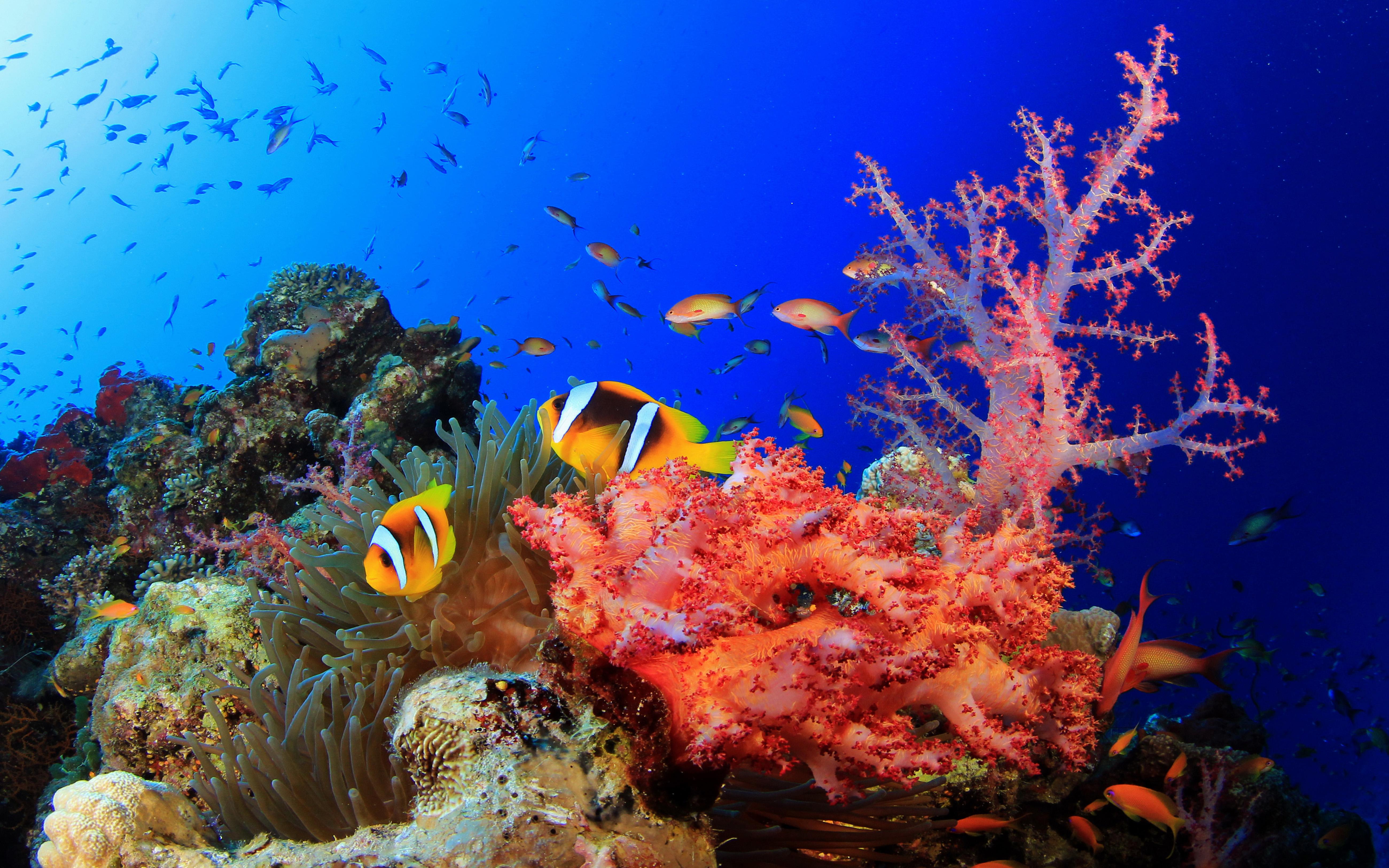Sea Turtle Iphone Wallpaper Underwater World Okean Corals Tropical Colorful Fish Hd