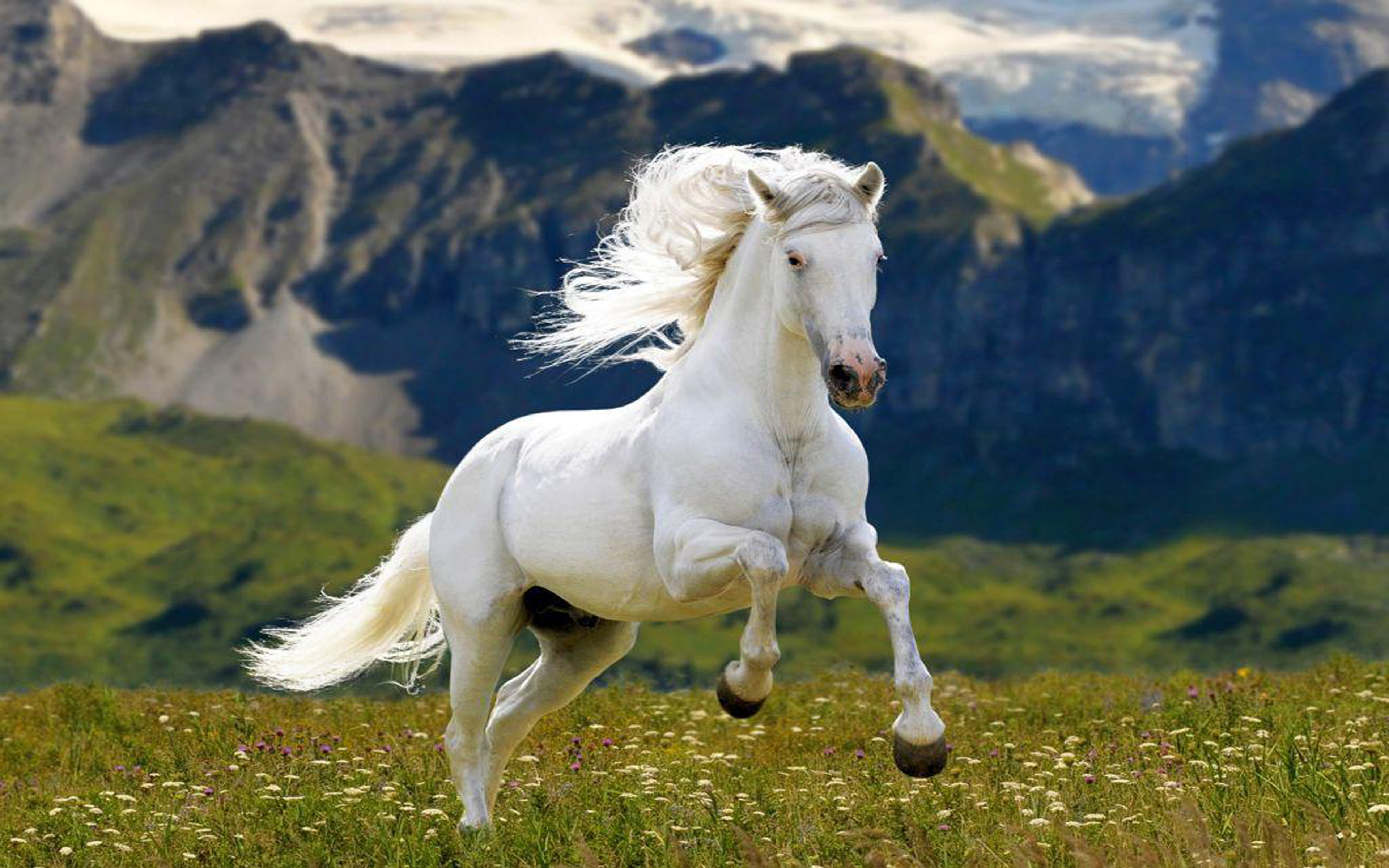 White Horse Meadow Grass Mountains Hd Wallpaper  Wallpapers13com