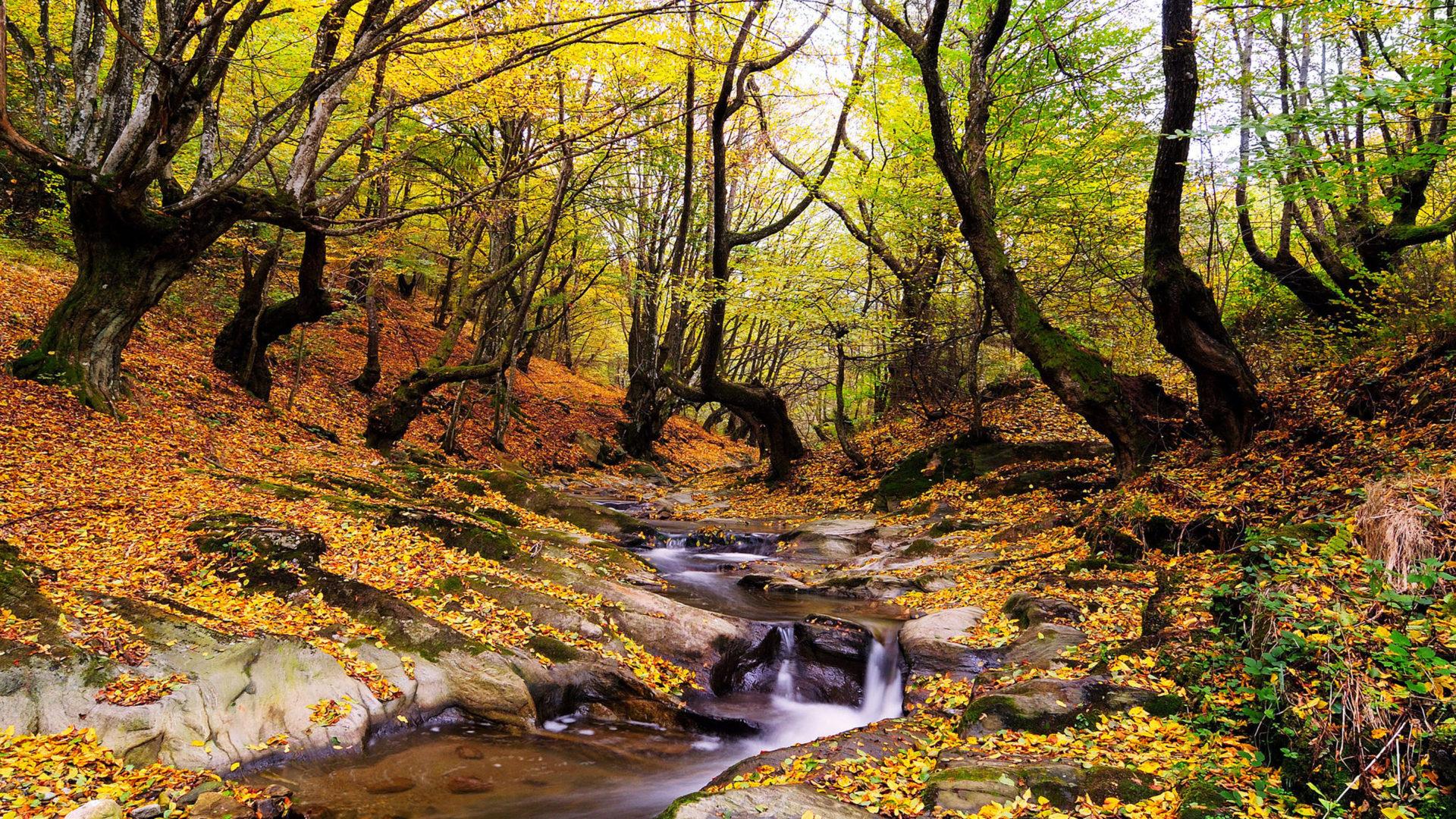 Free Computer Wallpaper Fall Leaves Wonderful Autumn Landscape Forest Trees Stream Fallen