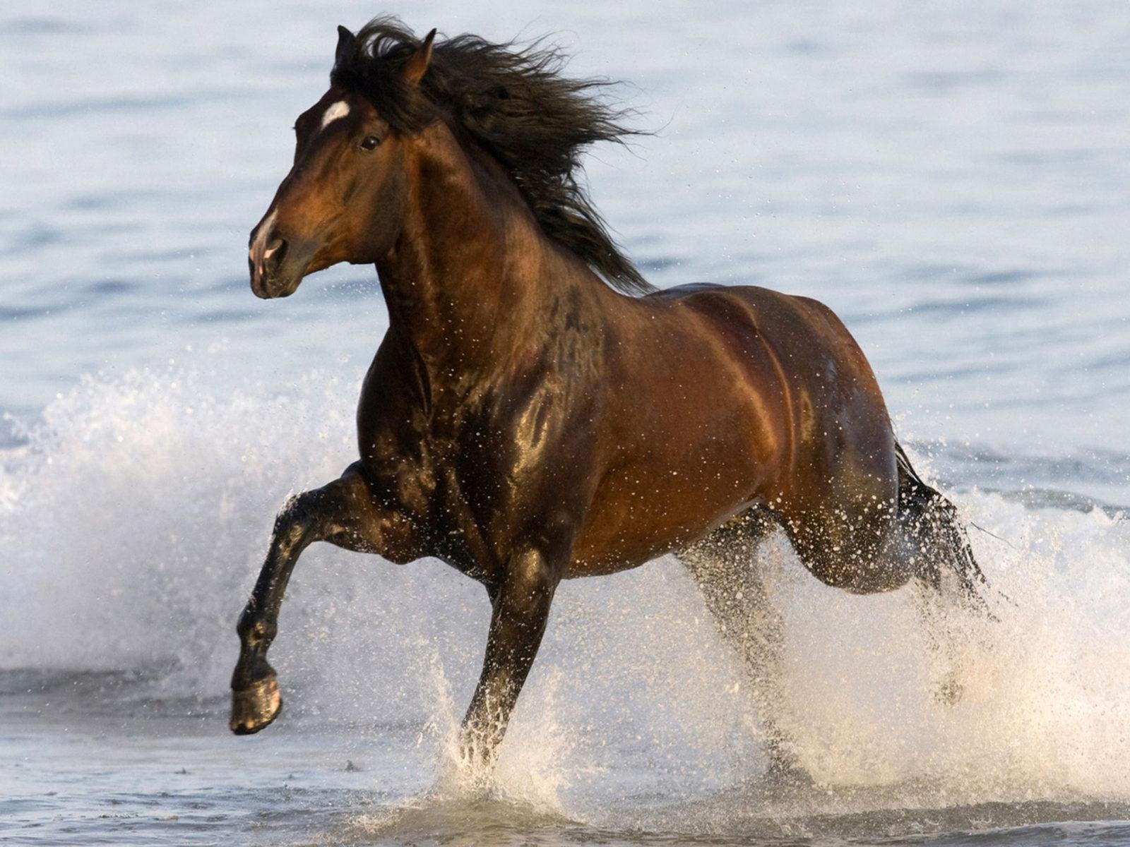 Cute Baby Horse Wallpaper Animals Black Horse Beach Sea Water Desktop Hd Wallpaper