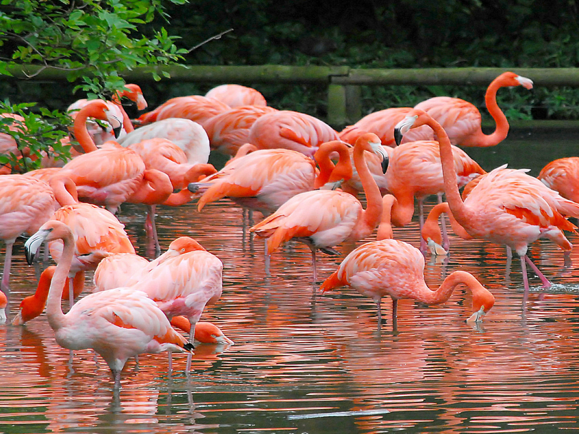 Cute Owl Iphone Wallpaper Flamingo There Are Four Species Of Flamingos In America