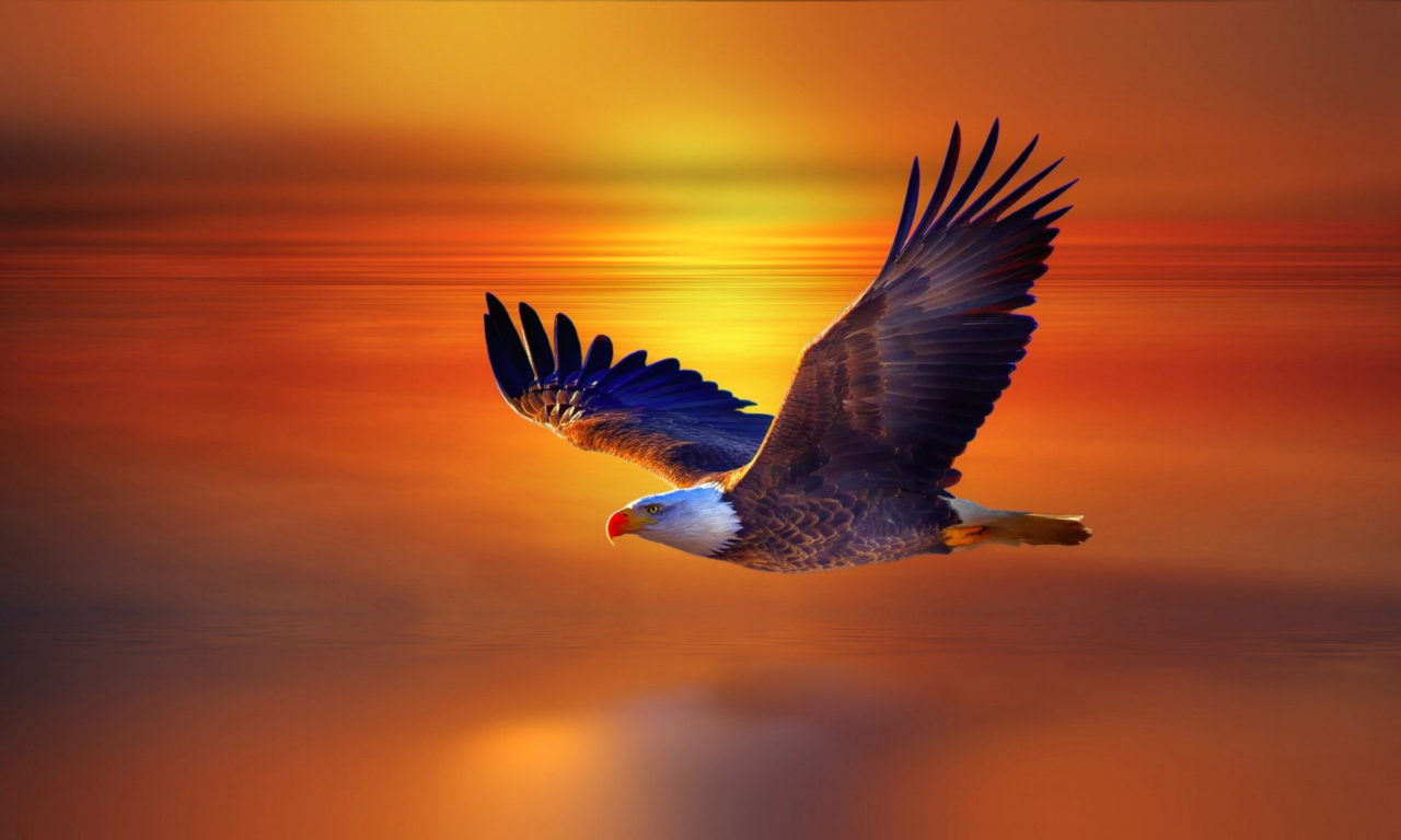 The Wall Iphone Wallpaper Flight Bald Eagle And Red Sky Sunset Beautiful Desktop