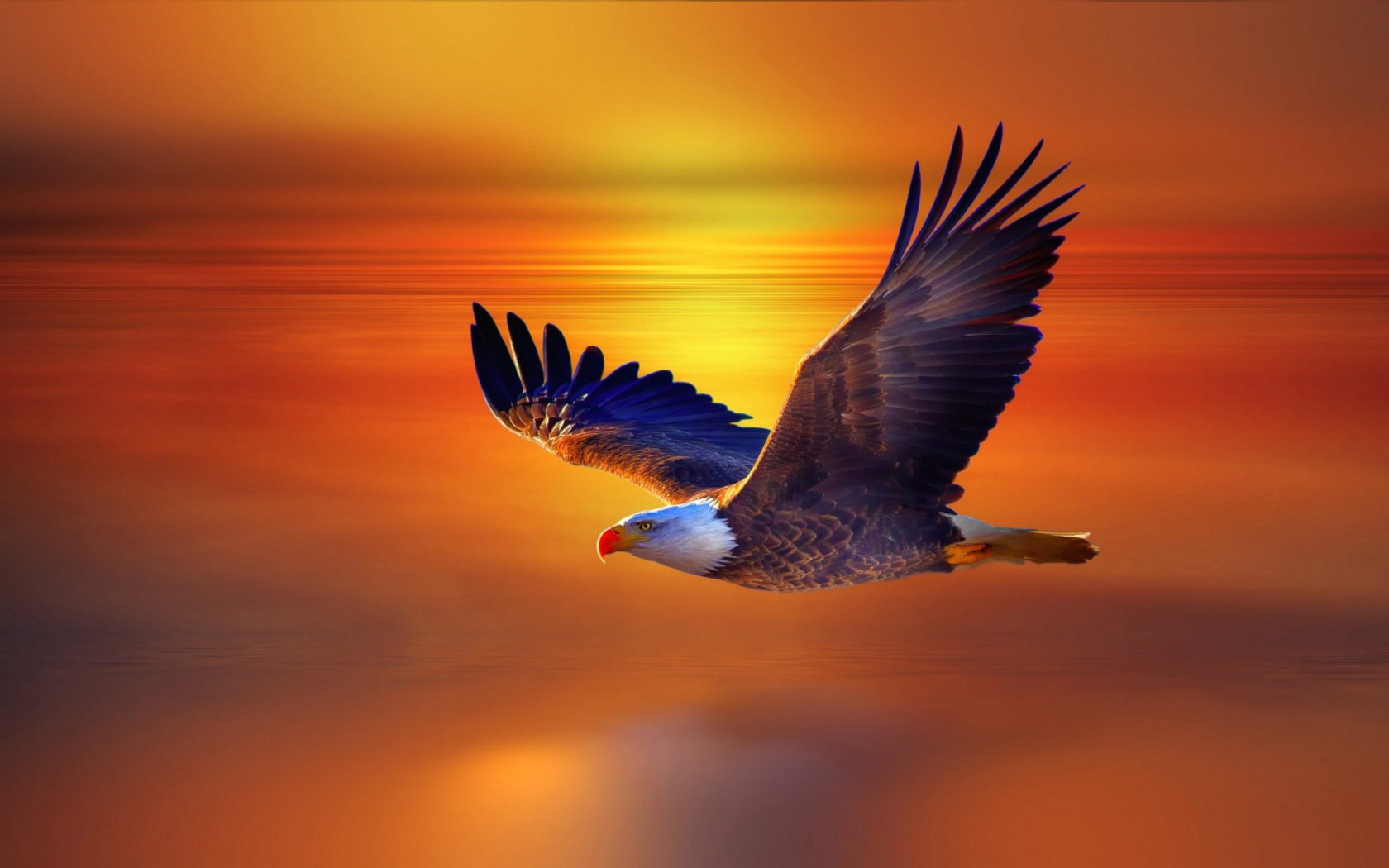 Eagle Wallpaper Iphone X Flight Bald Eagle And Red Sky Sunset Beautiful Desktop