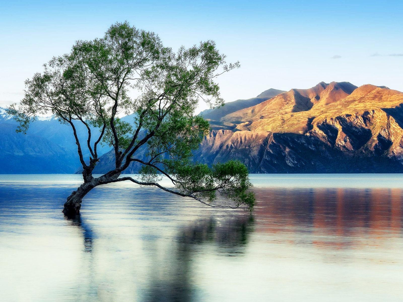 Fall Leaves Desktop Wallpaper Backgrouns Lake Wanaka Beautiful Reflection New Zealand Wallpaper For