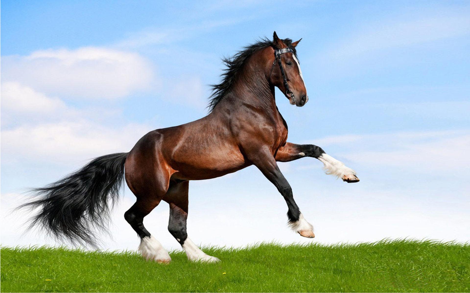 Cute Jungle Wallpaper Large Black Horse Running In A Field Of Green Grass