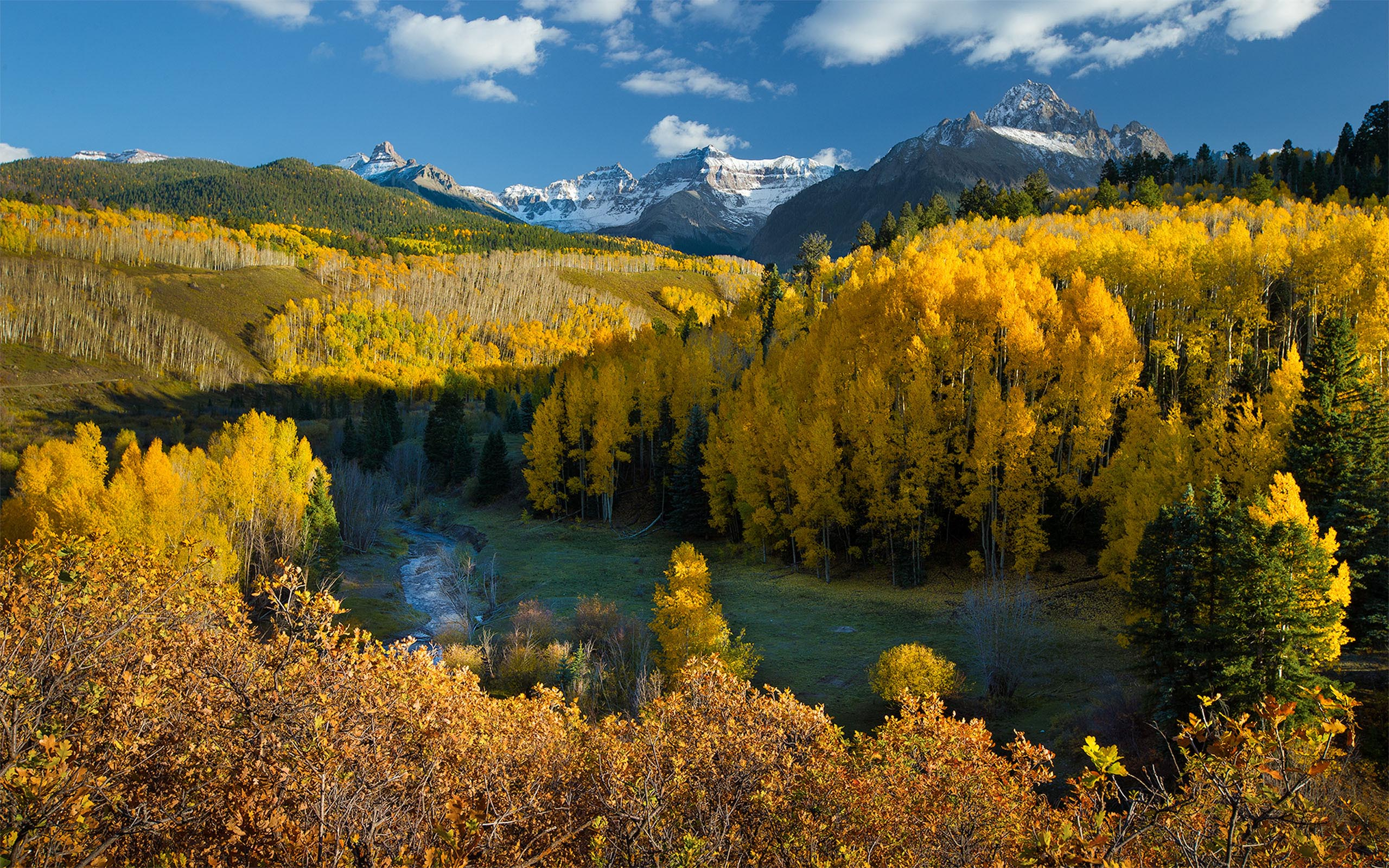 Windows 10 Wallpapers Hd Fall Nature Autumn In Colorado Forest With Yellow Leaves