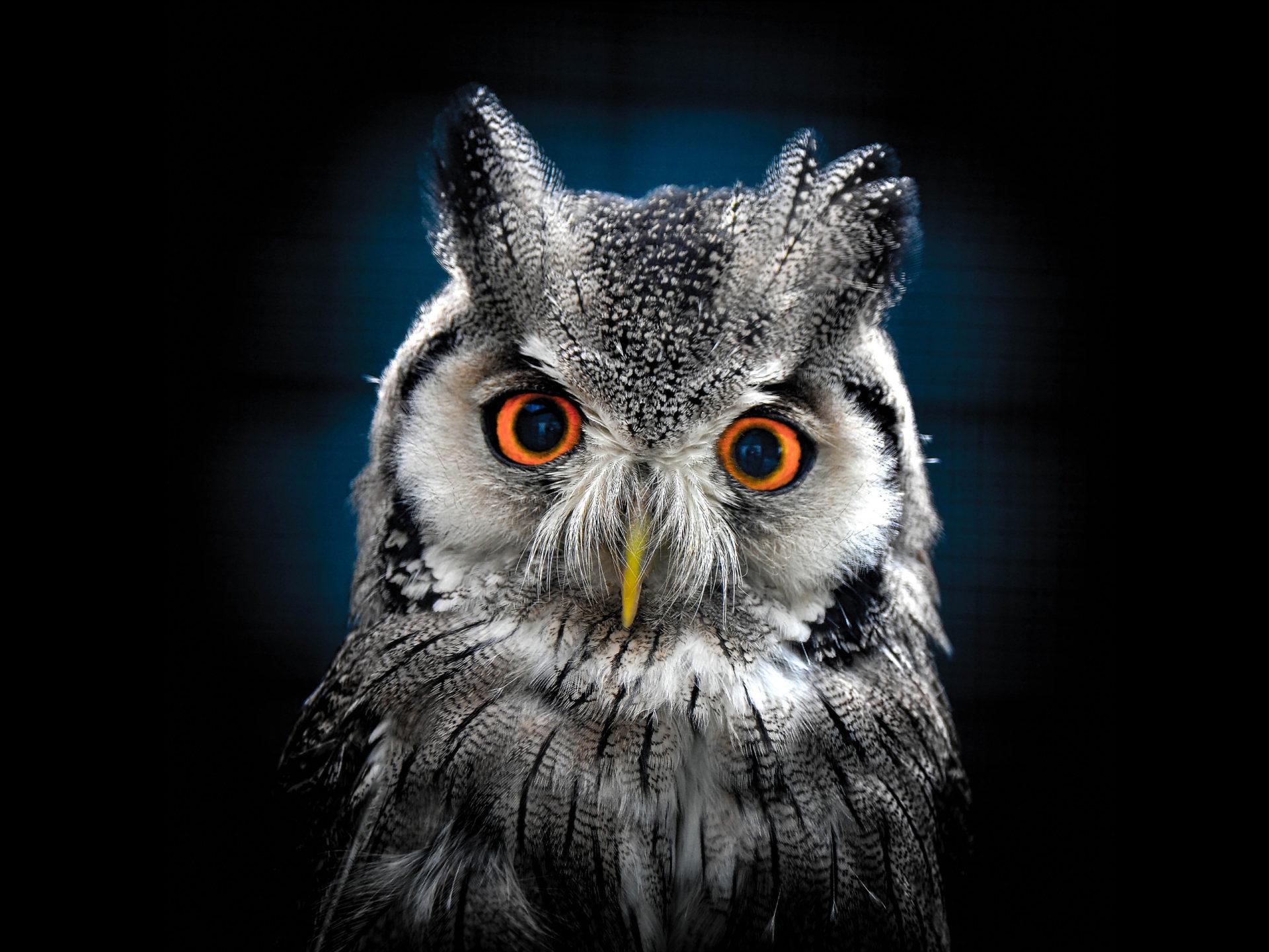 Cute But Sad Wallpaper Owl Wallpaper Best Wallpaper Hd For Desktop Wallpapers13 Com