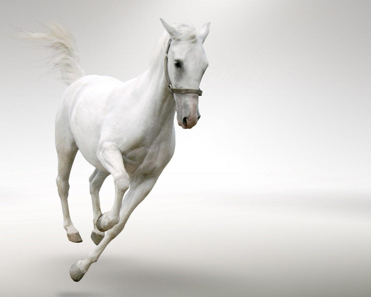 Cute Christmas Penguin Wallpaper White Horse Running Desktop Wallpaper Hd Wallpapers13 Com