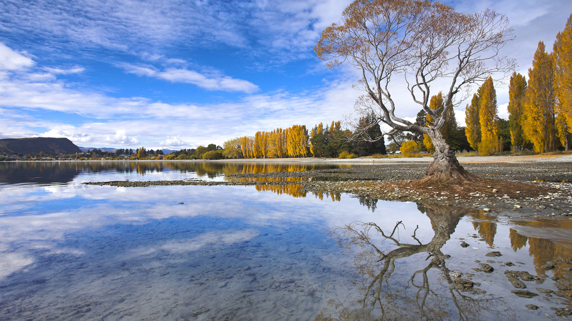 Light Green Iphone Wallpaper Spectacular Autumn Colour Beside The Lake At Wanaka Otago