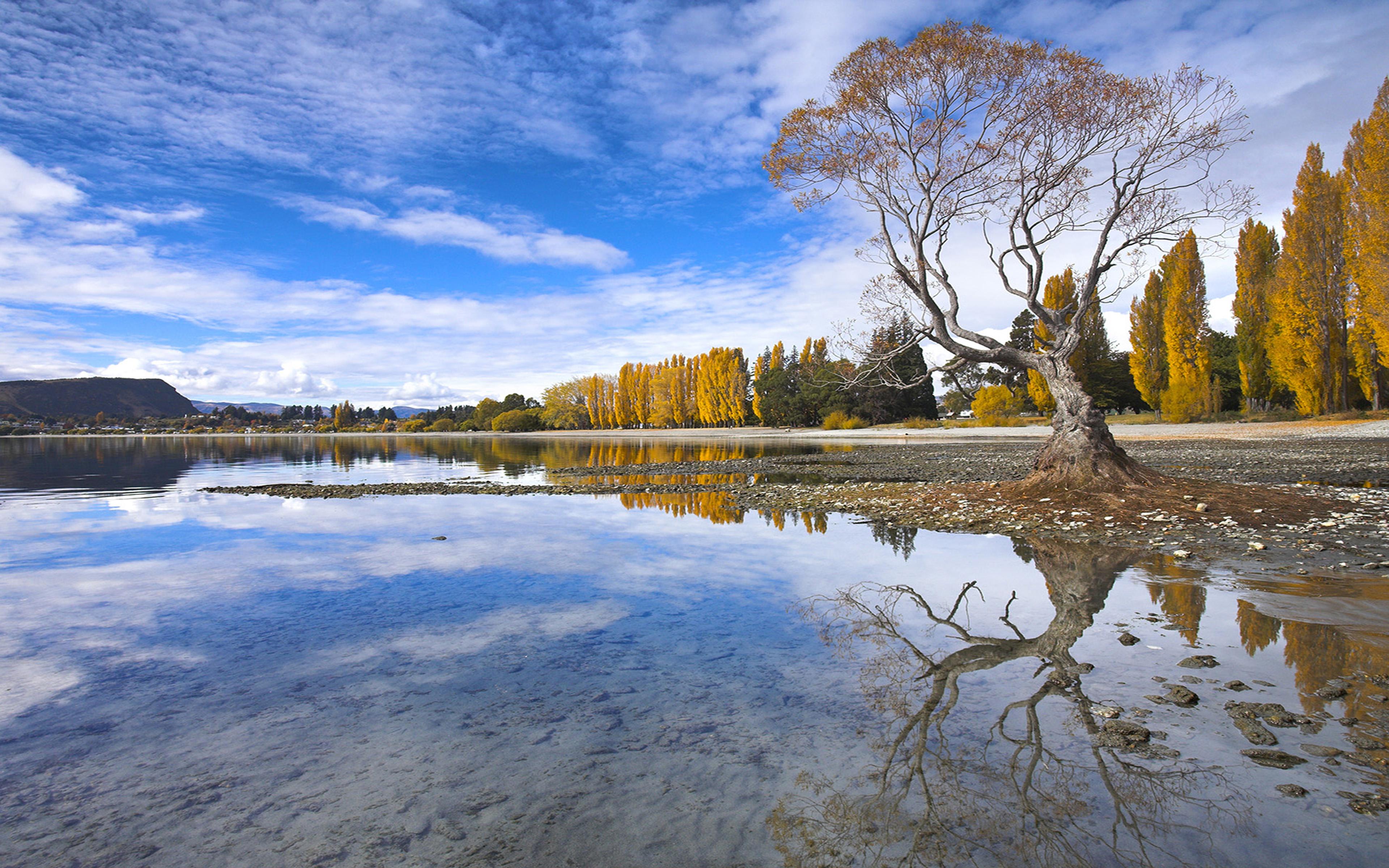 Donald Duck Iphone Wallpaper Spectacular Autumn Colour Beside The Lake At Wanaka Otago