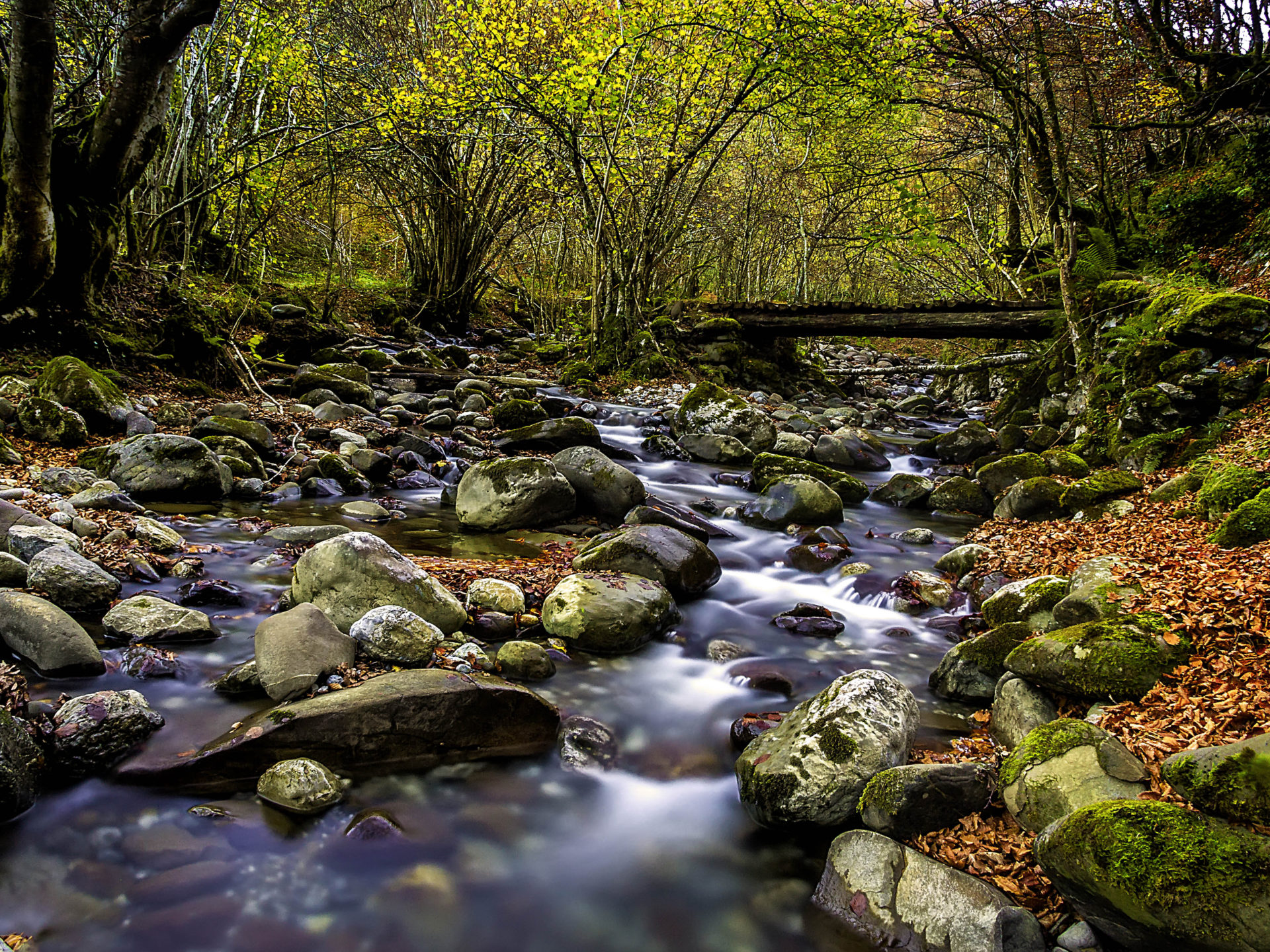 Clear Forest Stream Stones With Green Moss Red Leaves Fallen Tree Wooden Bridge Autumn Wallpaper