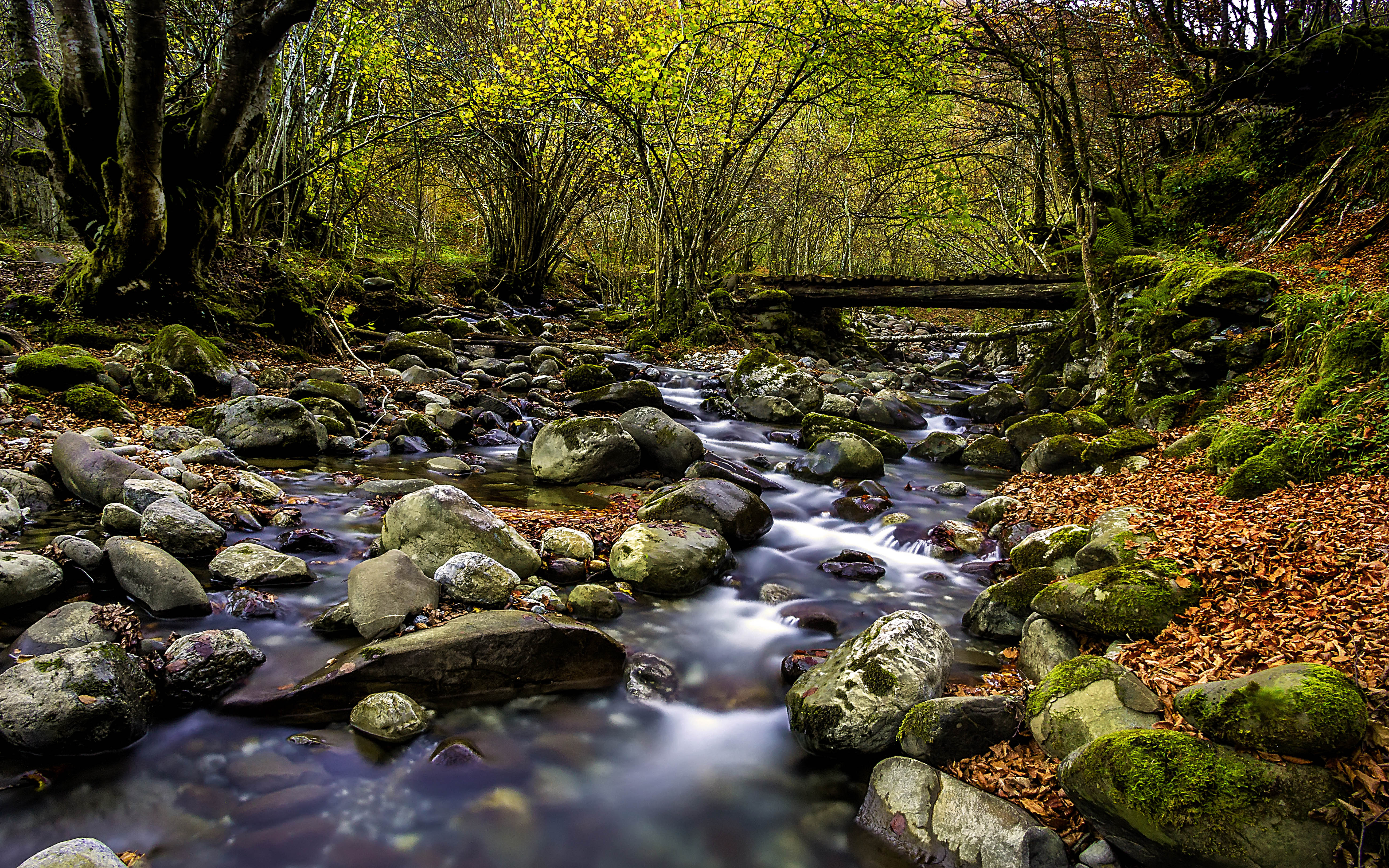 Nature Wallpaper Autumn Fall 1600x1200 Clear Forest Stream Stones With Green Moss Red Leaves