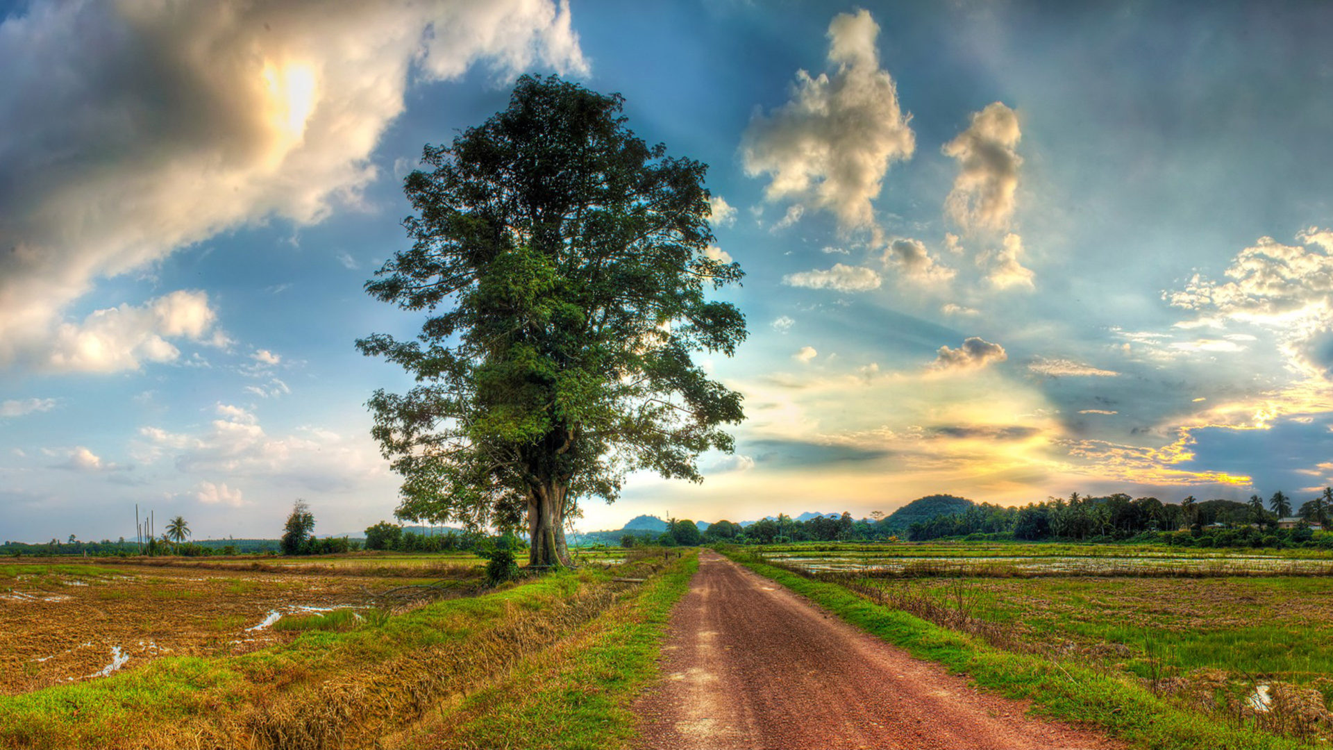 Free Iphone Wallpaper Fall Country Road Field Lonely Tree Grass White Sky Cloud