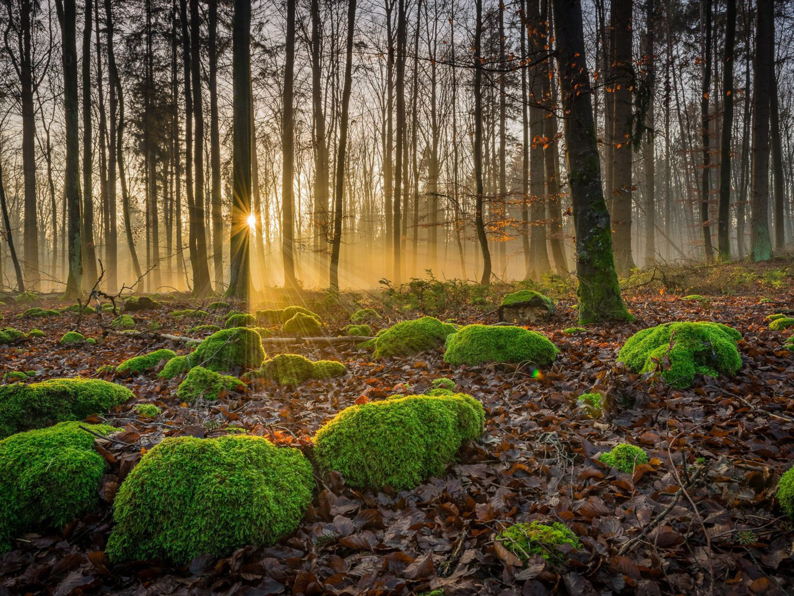 Free Fall Wallpapers For Ipad Fall Forest With Trees Fallen Leaves Stones With Moss