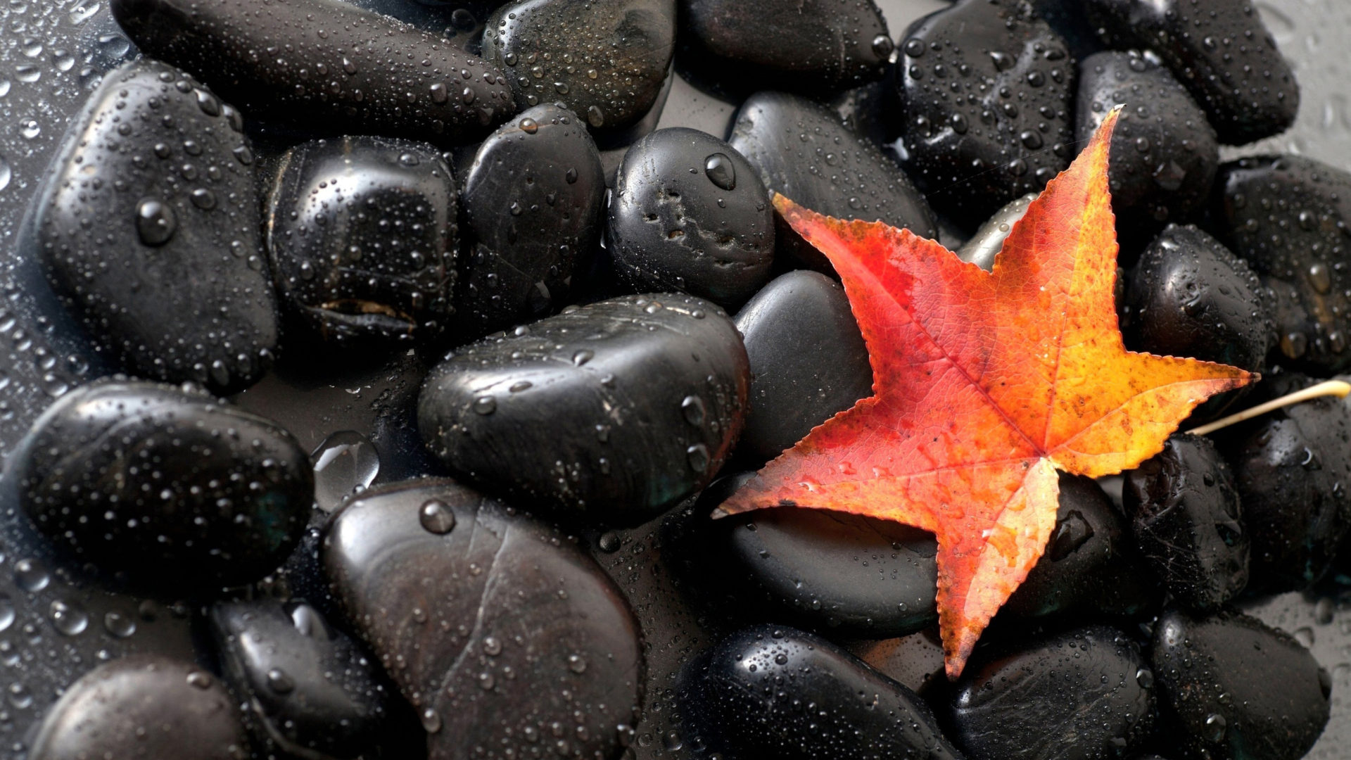 Fall Themed Computer Wallpaper Gorgeous Black Stones Red Autumn Leaf Hd Desktop Wallpaper