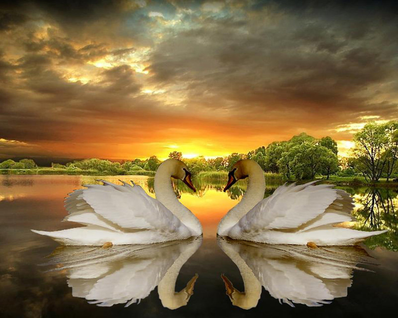Download Wallpapers Of Couples With Quotes Love Of Swans Lake Trees Dark Clouds Sunset Desktop