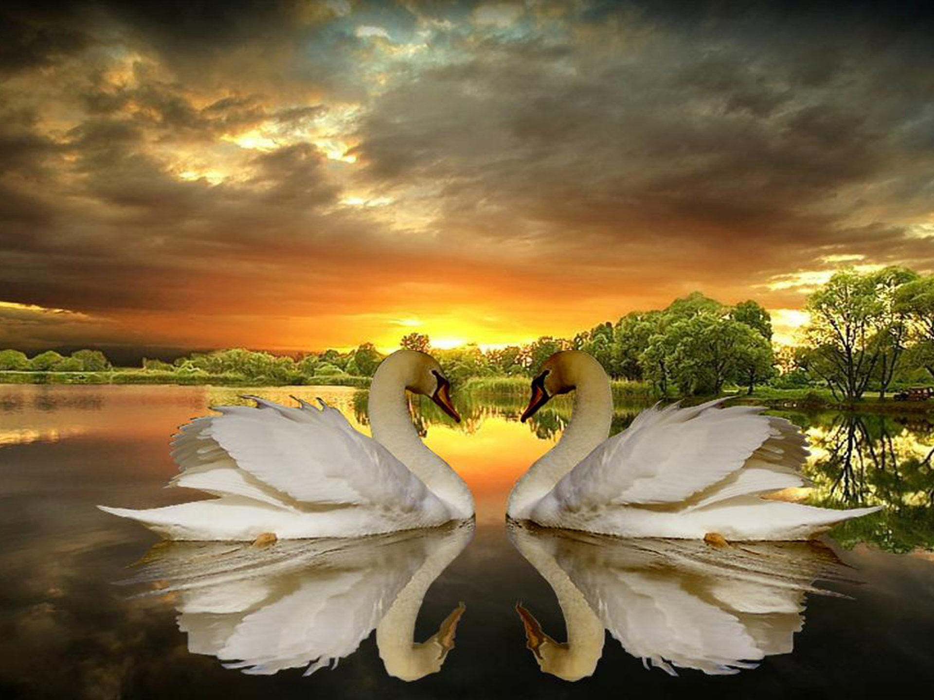 Fall Wallpaper For Laptops Love Of Swans Lake Trees Dark Clouds Sunset Desktop