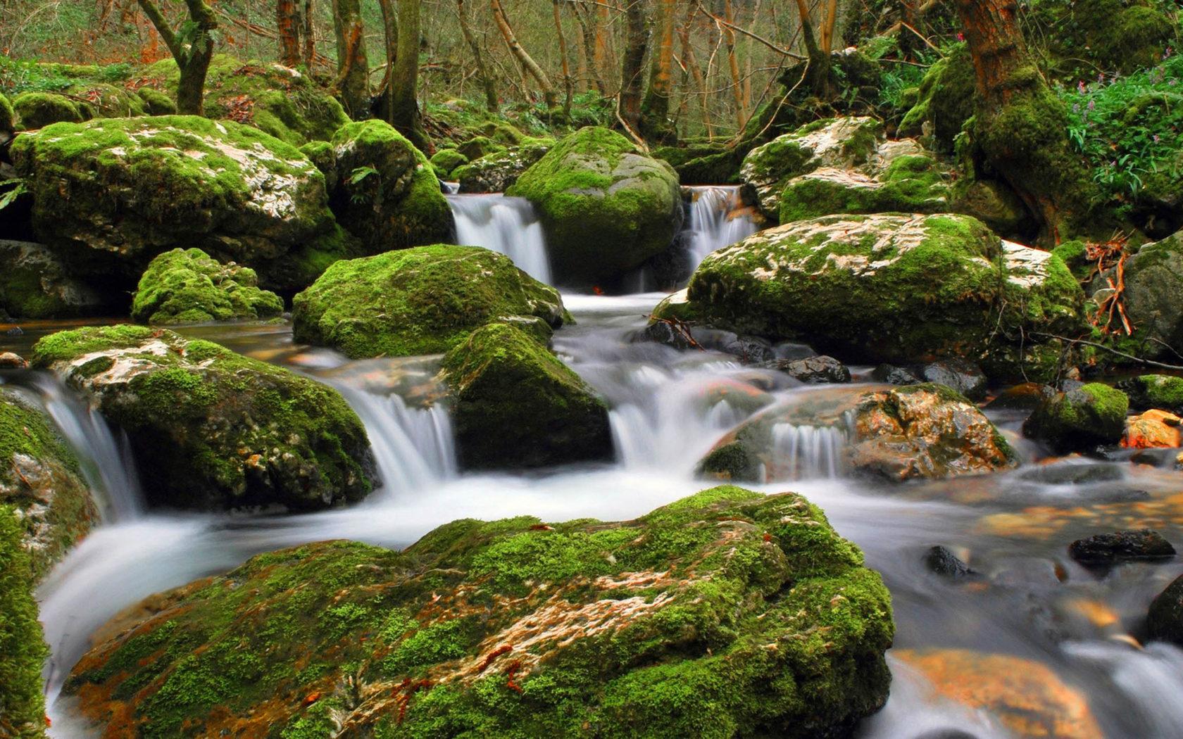 Beautiful Fall Landscape Wallpaper Nature Stream Of Clear Water Flowing Between Rocks Moss
