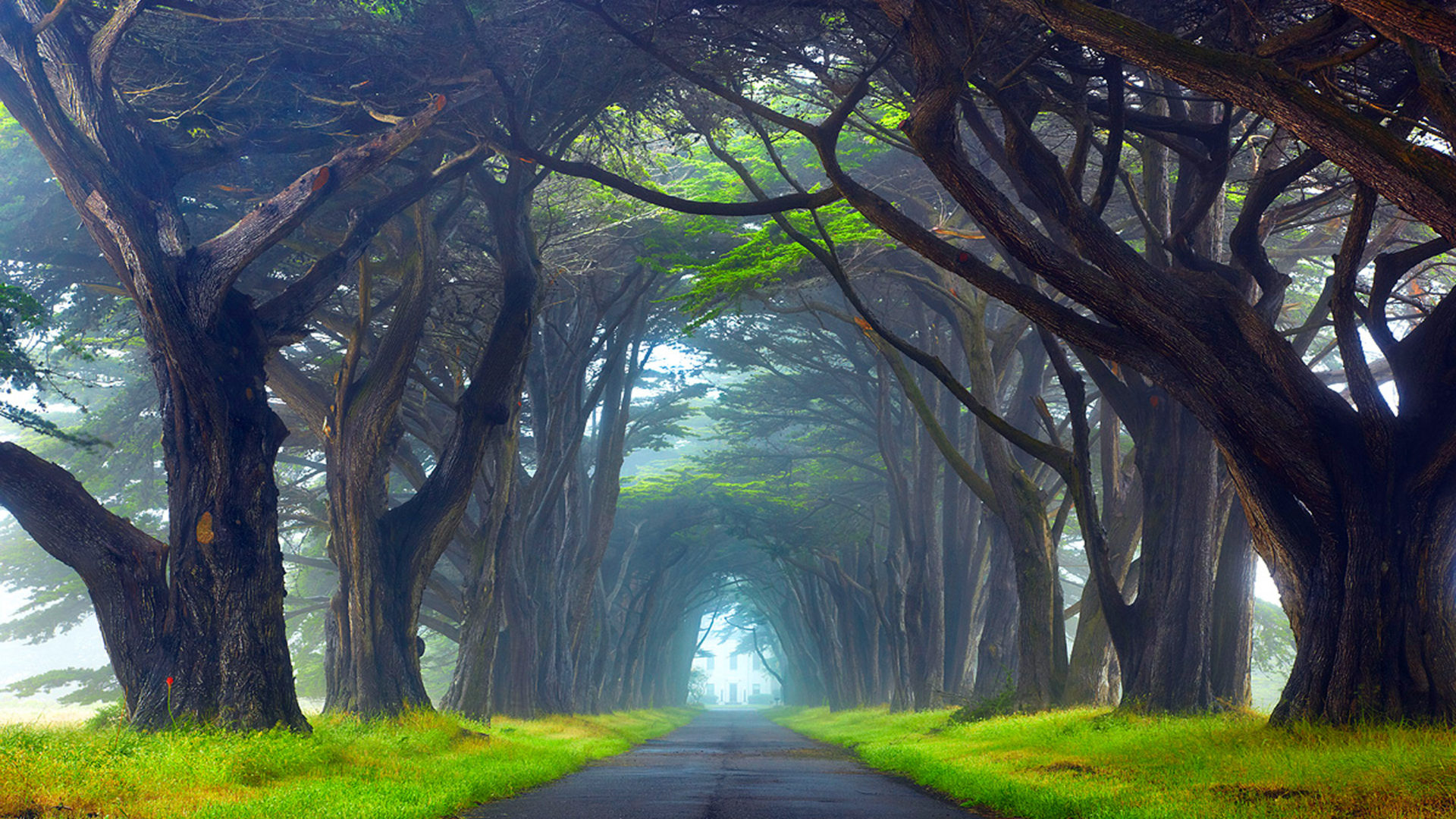 Fall Scene Wallpaper For Iphone Nature Tunnel Of Trees Way Point Reyes National Seashore