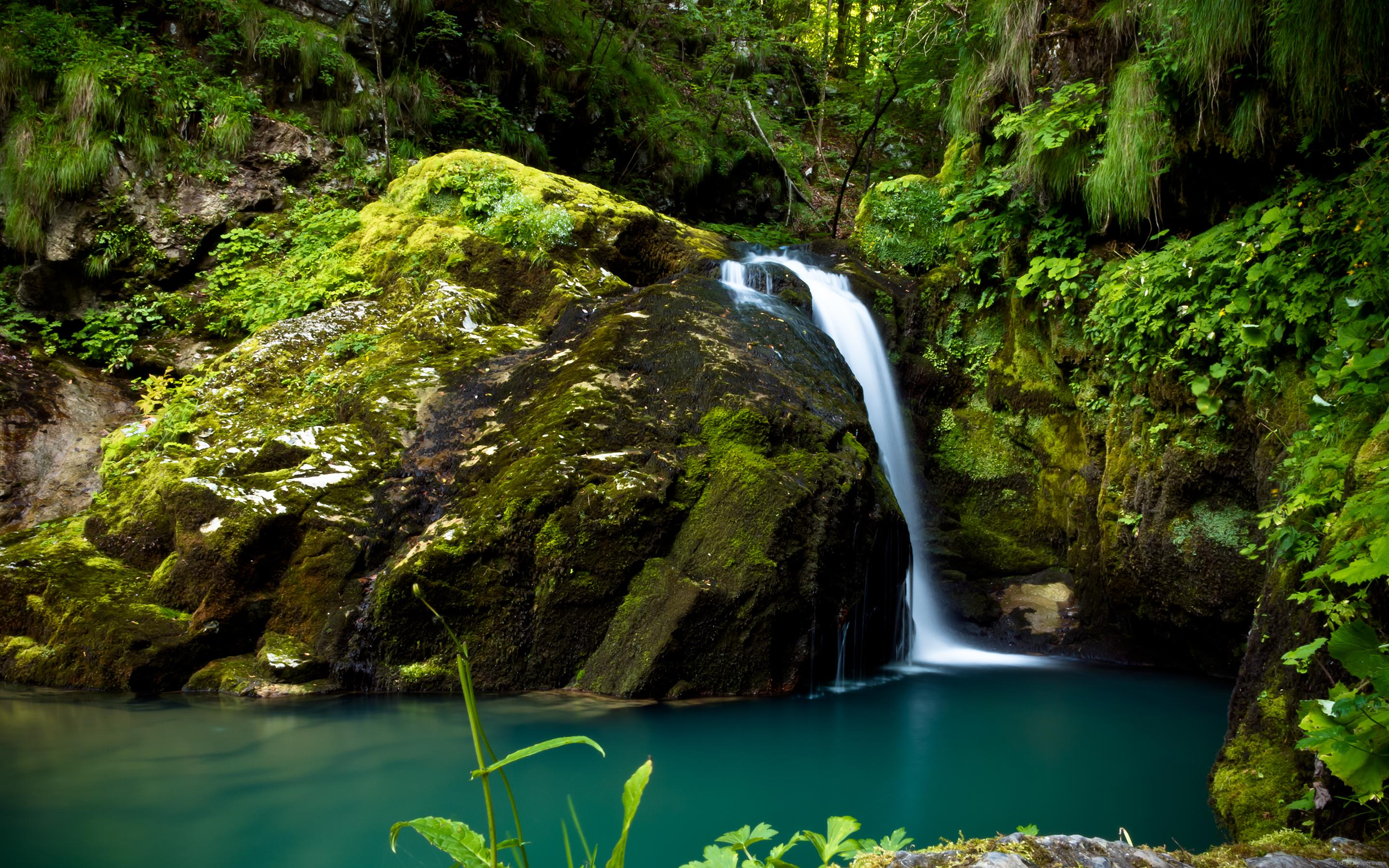 Rainforest Small Stream Waterfall Blue Water Large Rocks With Moss Widescreen Free Download