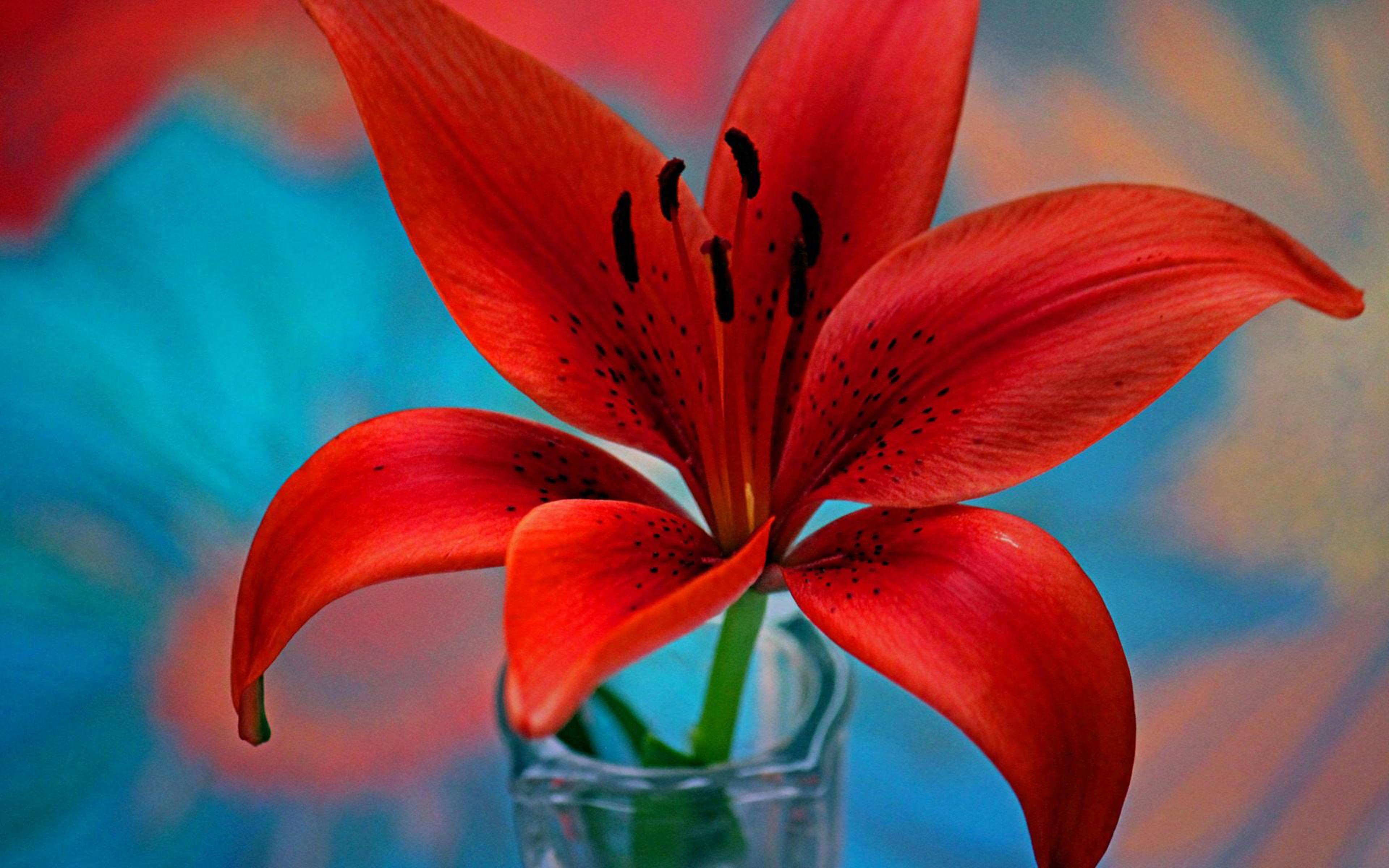 Cute Lock Screen Wallpaper Hd Red Lily Flower Wallpaper For Desktop Hd 3840x2400